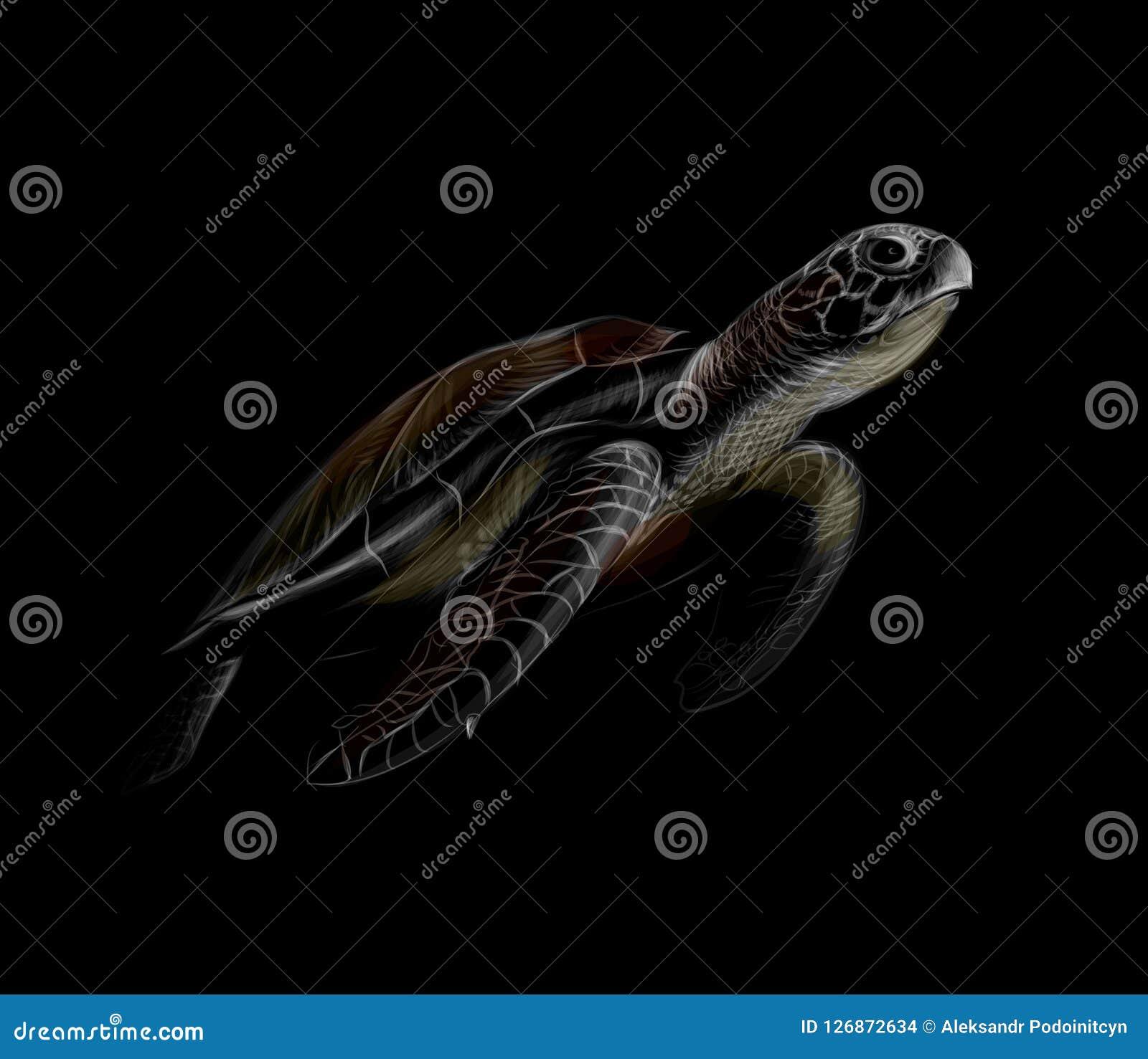 Портрет большой морской черепахи на черной предпосылке