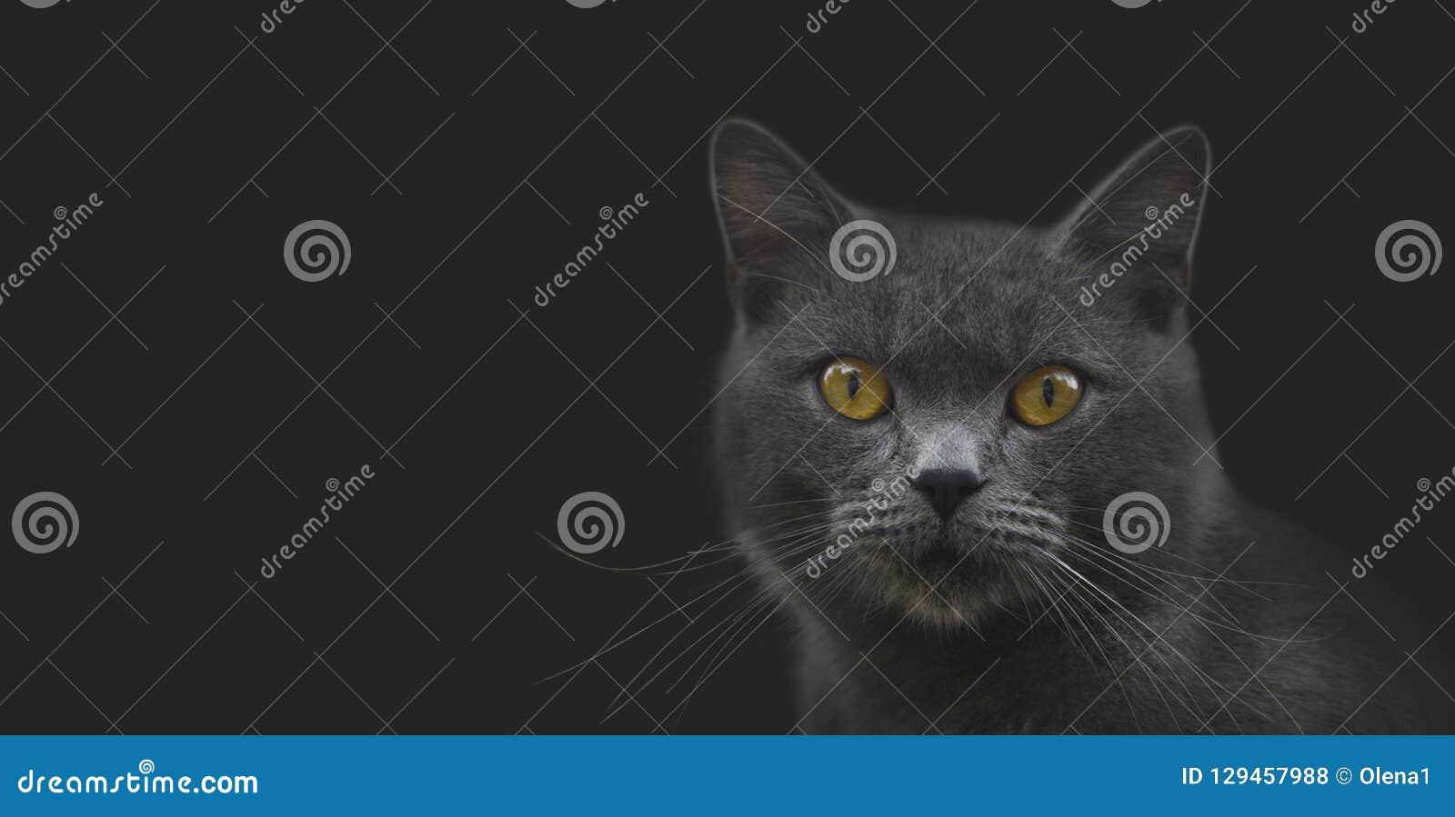 Портрет кота Moggy