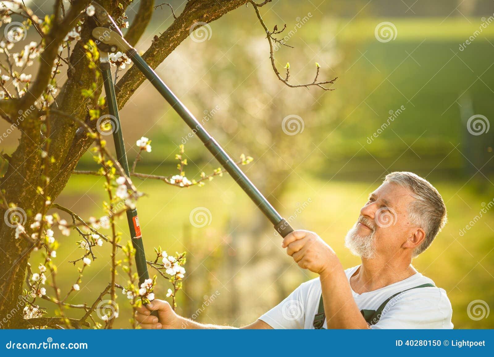 Портрет красивого старшего человека садовничая в его саде