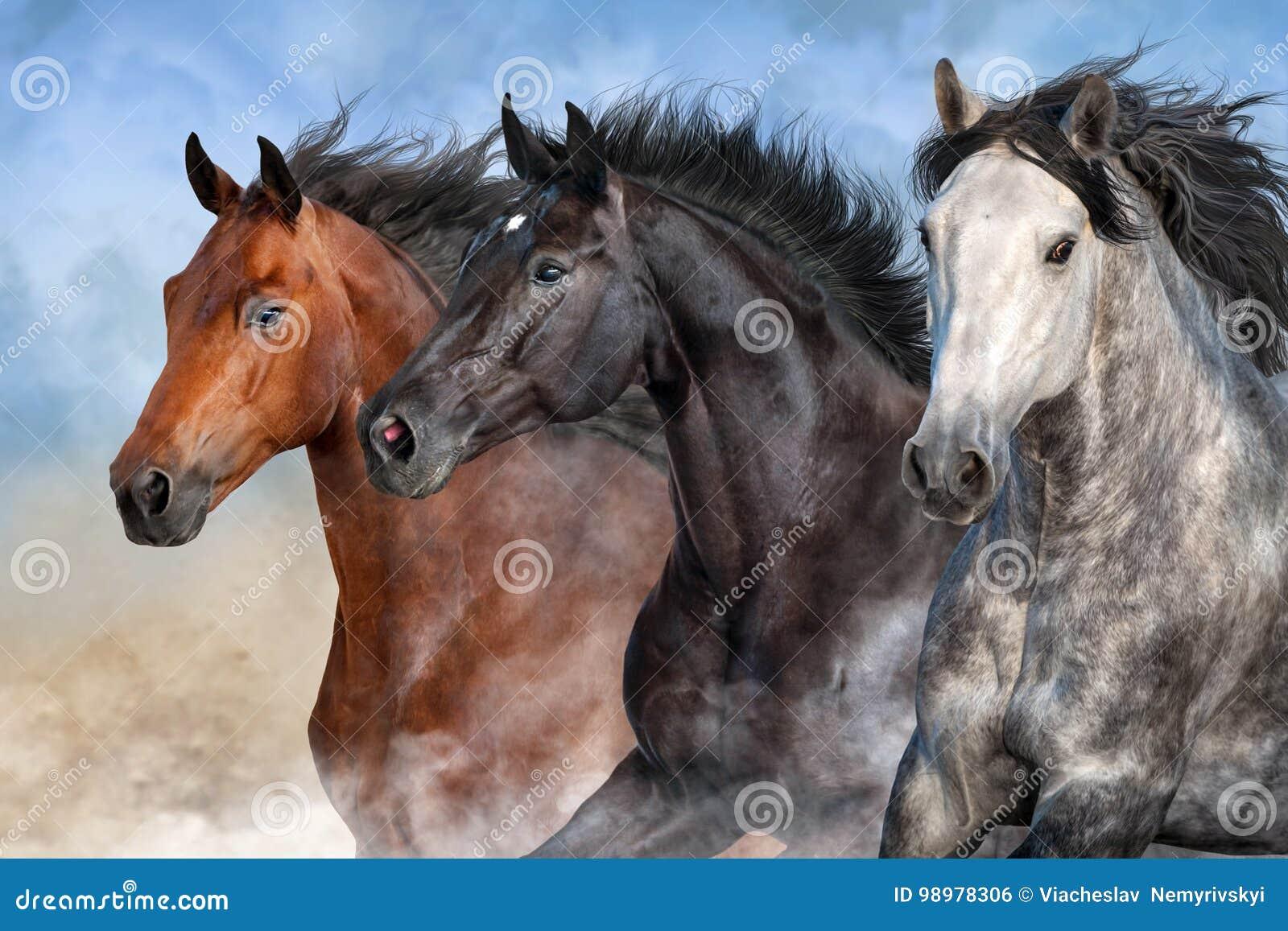 Портрет лошадей в пыли