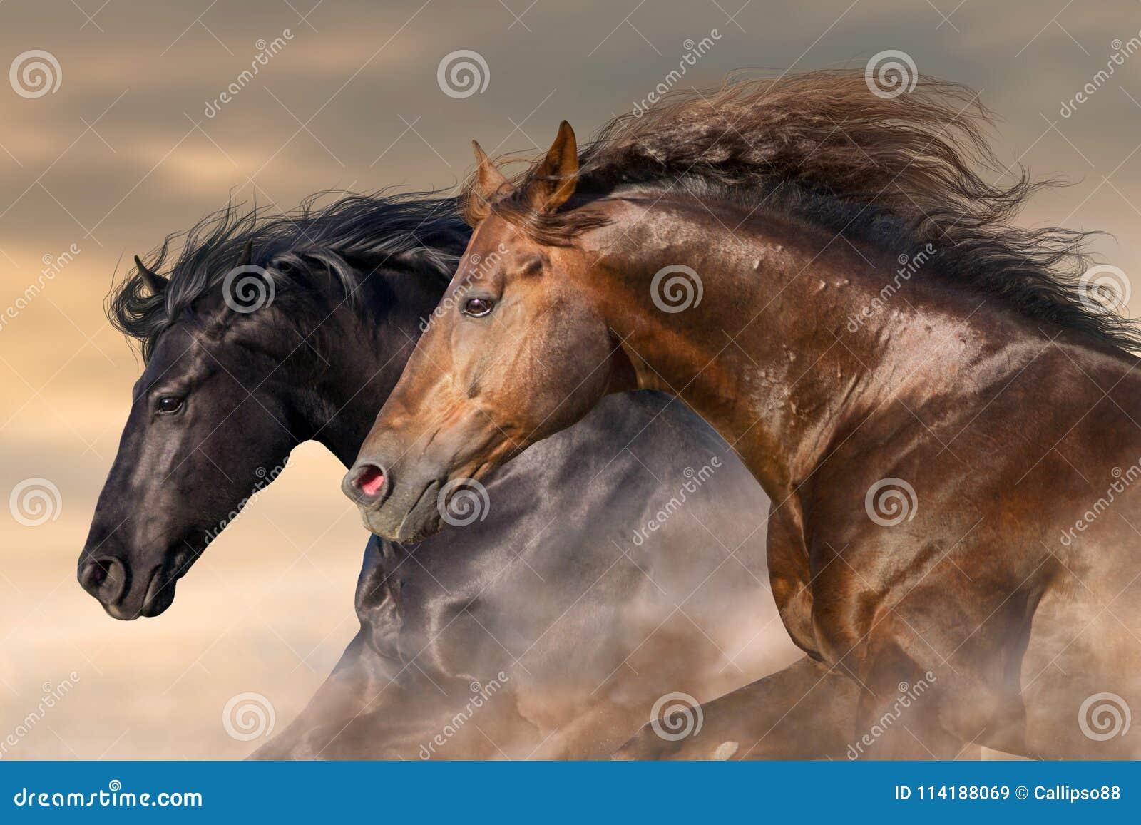 Портрет лошади пар в движении
