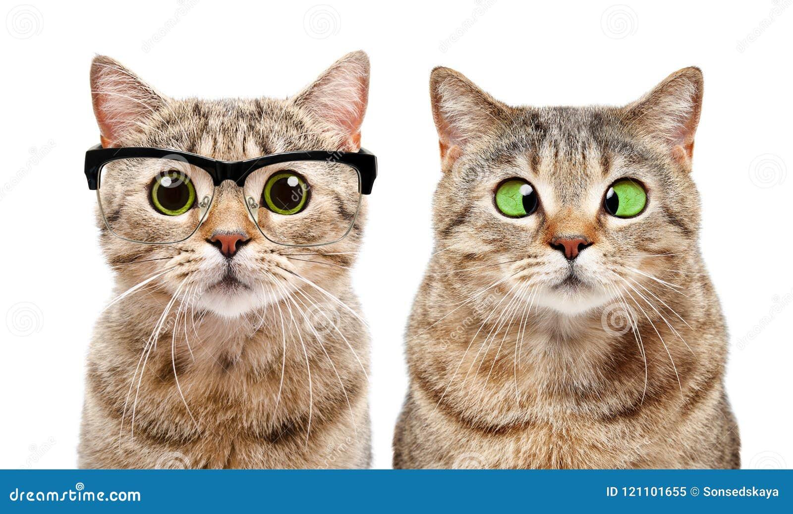 Портрет 2 милых котов с заболеваниями глаза