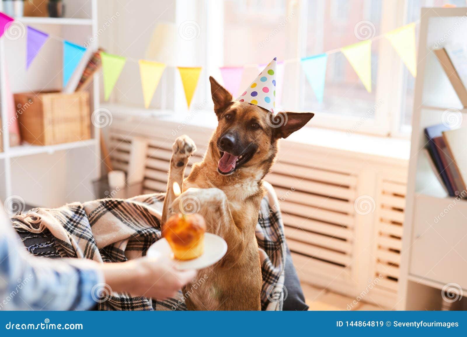 Именниный пирог для собаки
