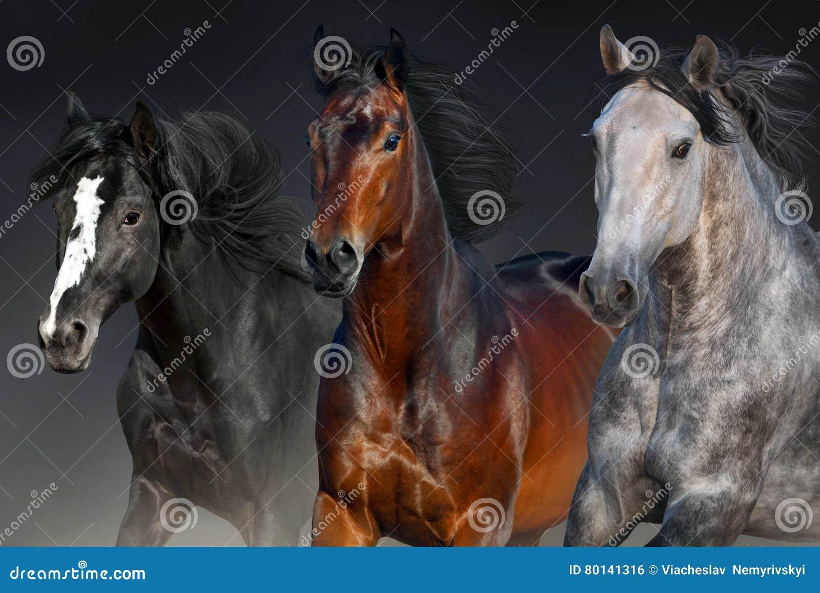 Портрет лошадей в движении