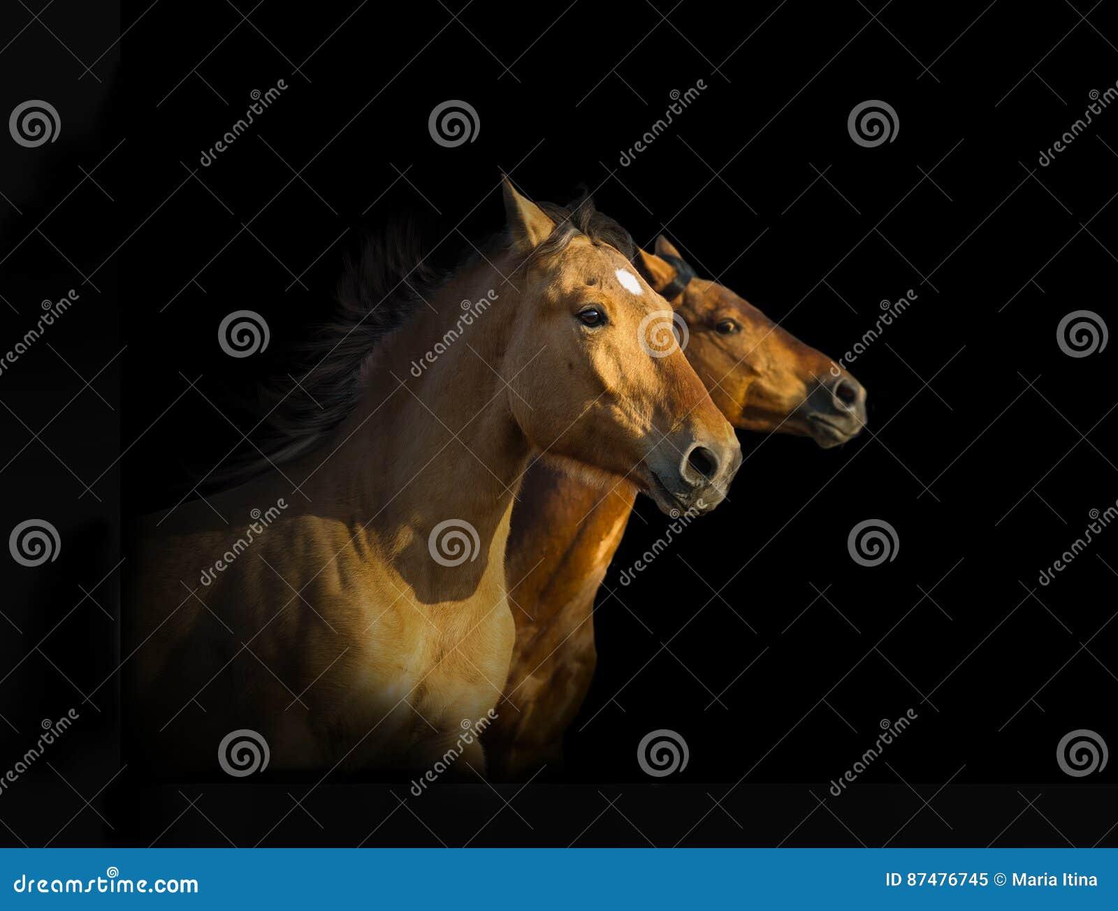 Портрет 3 лошадей мустанга