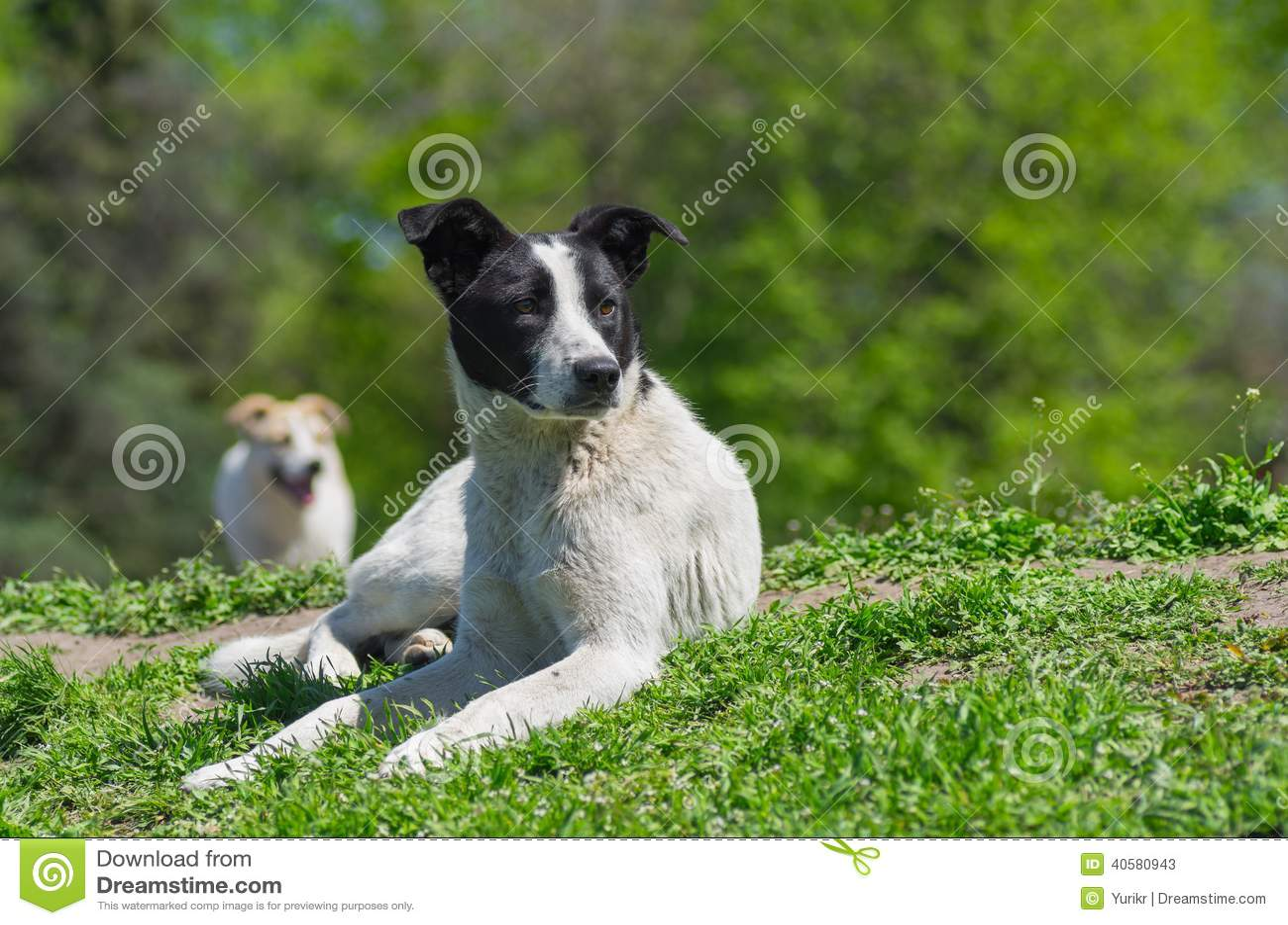 Портрет прелестной бездомной собаки