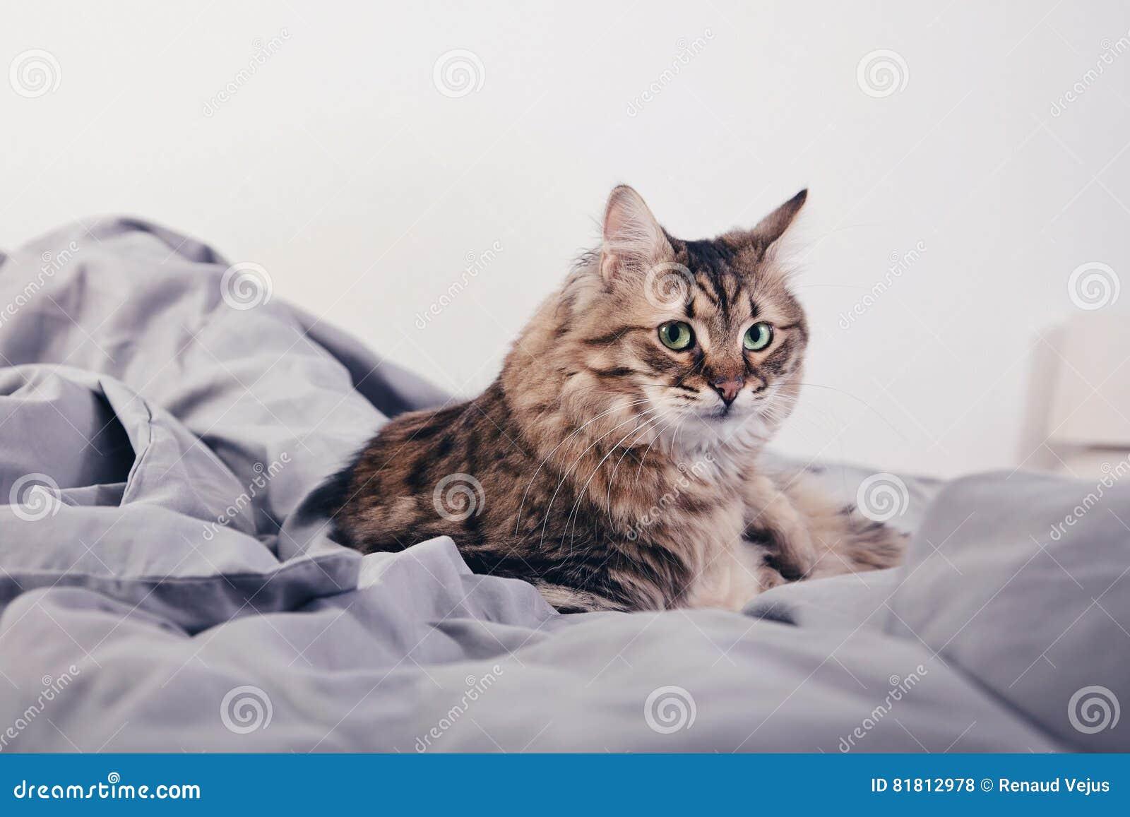 Портрет пушистого кота