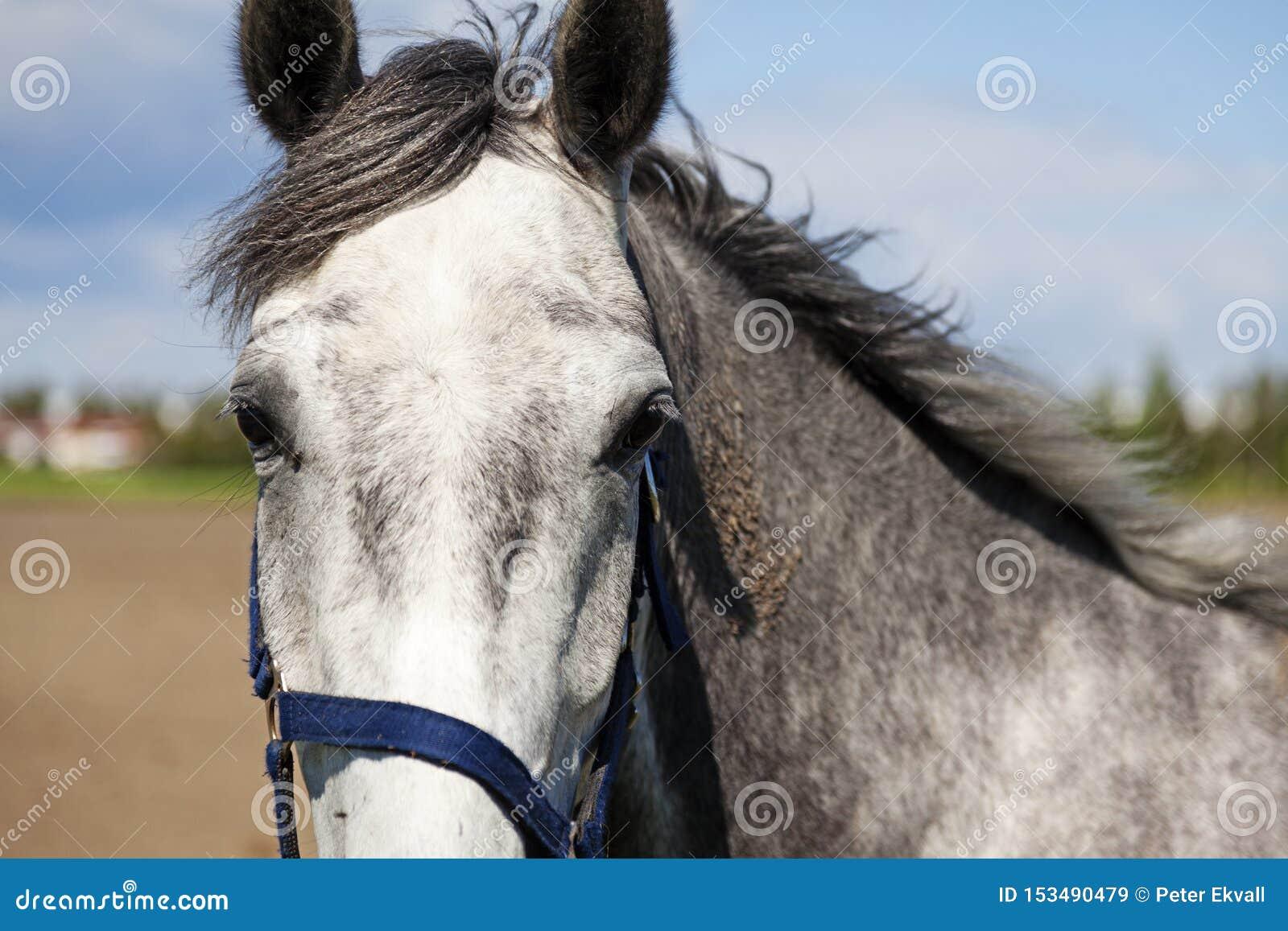 Портрет серой белой лошади в саде лета