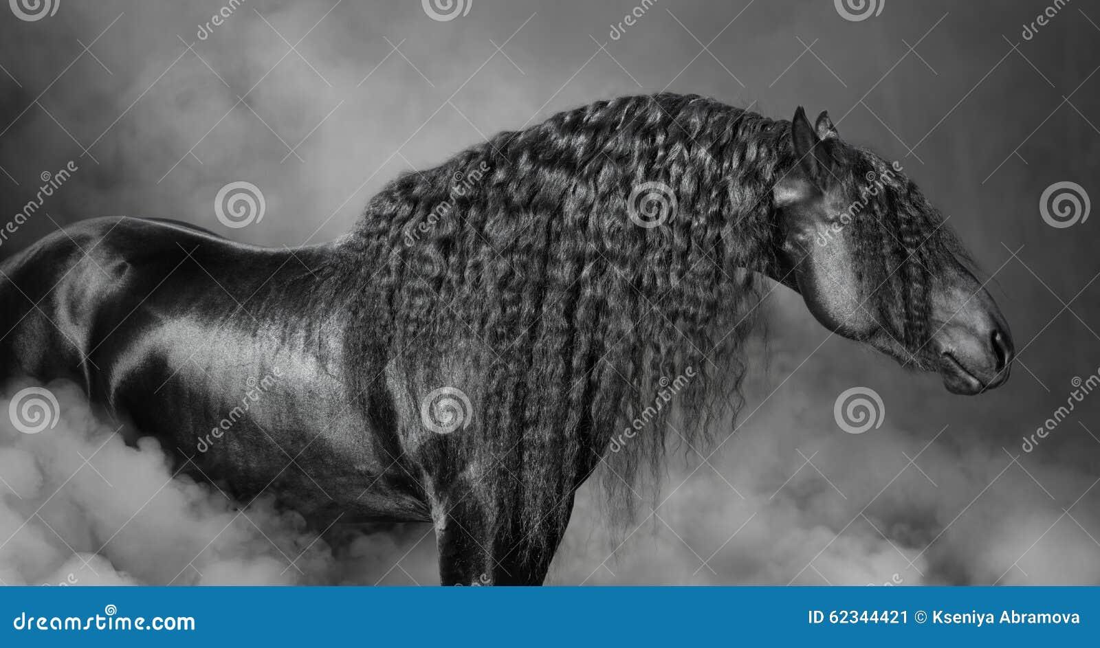 Портрет черной лошади Frisian с длинной гривой в дыме