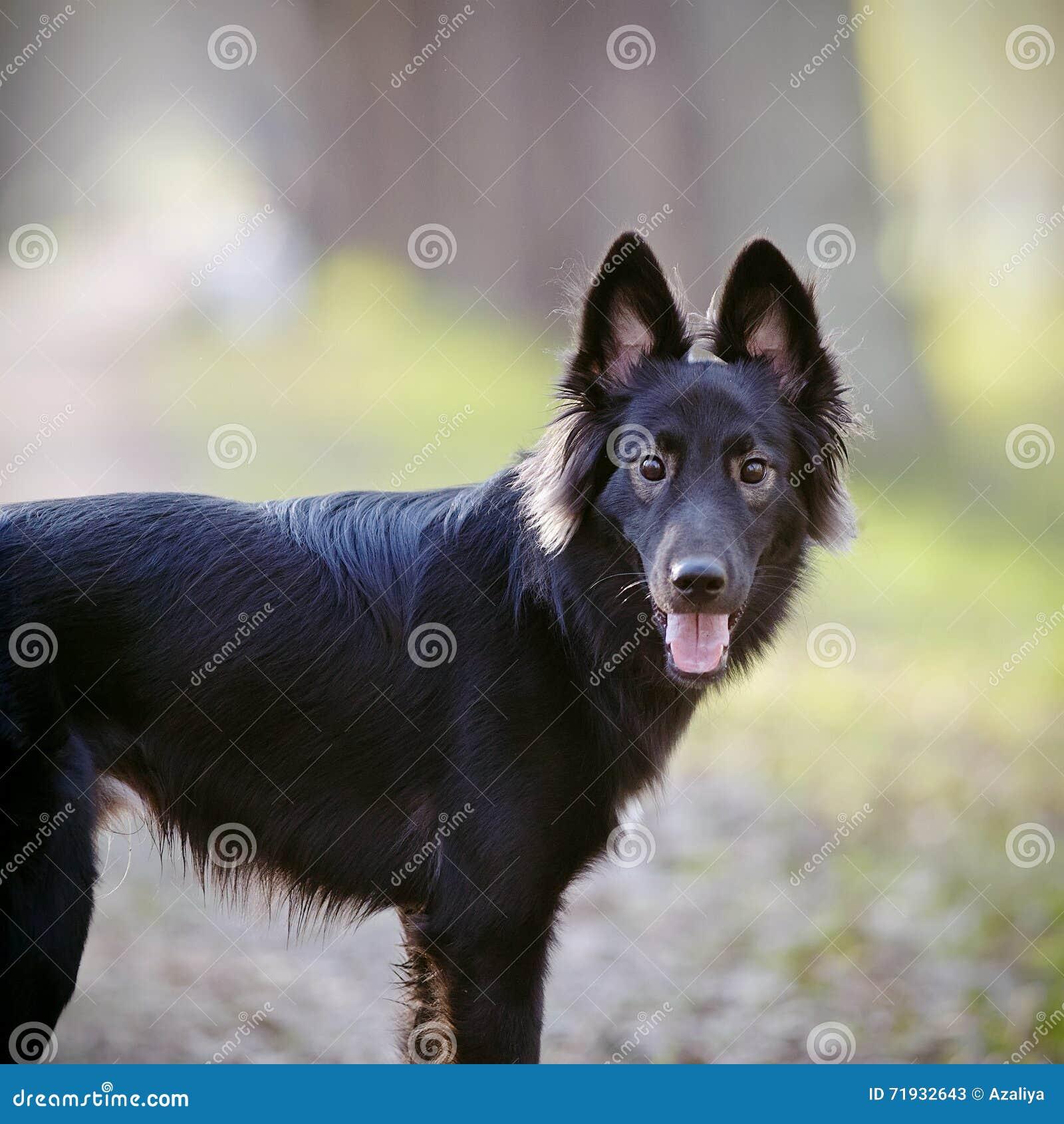 портрет черной собаки