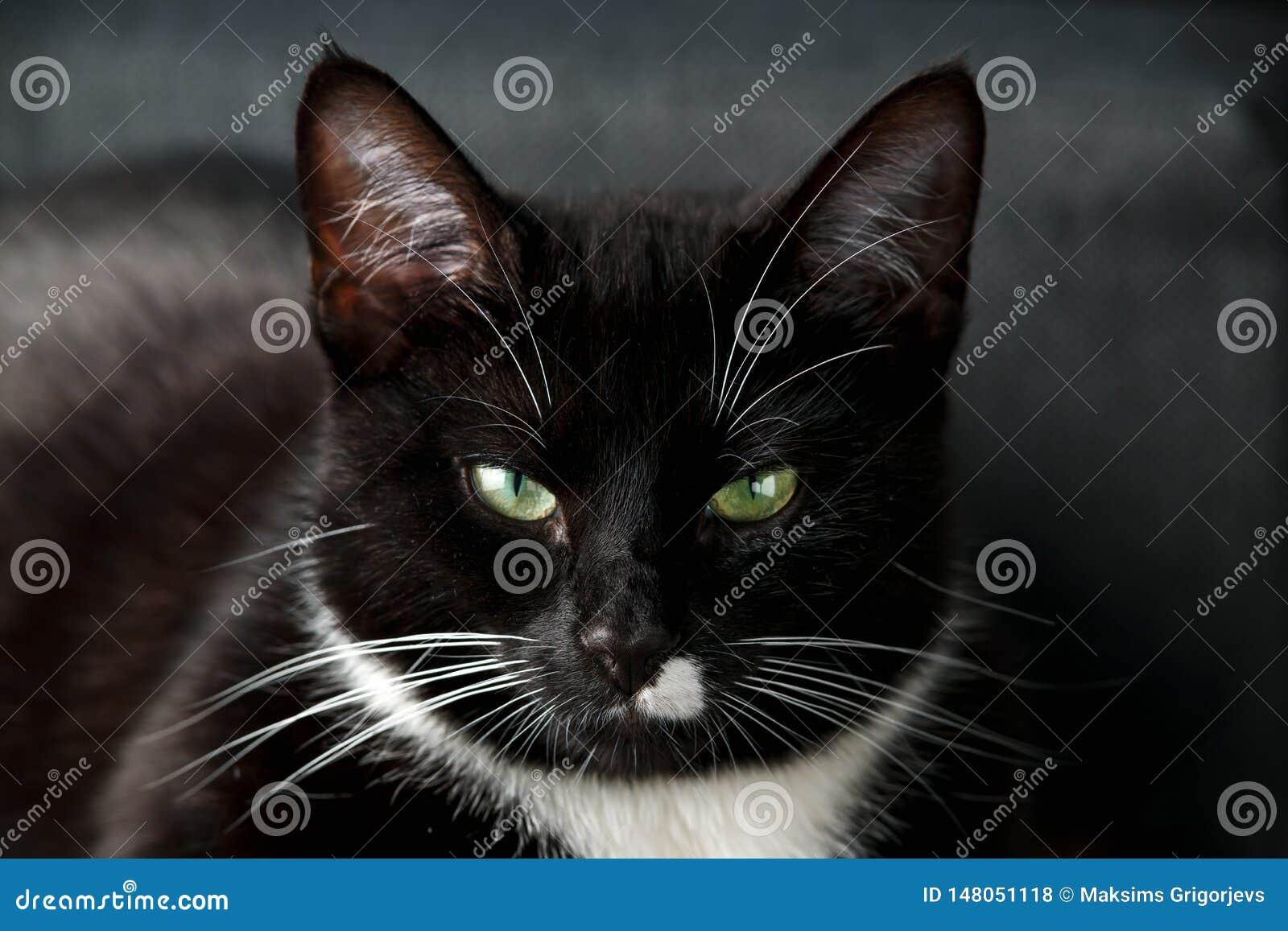 Портрет черно-белой домашней кошки с зелеными глазами