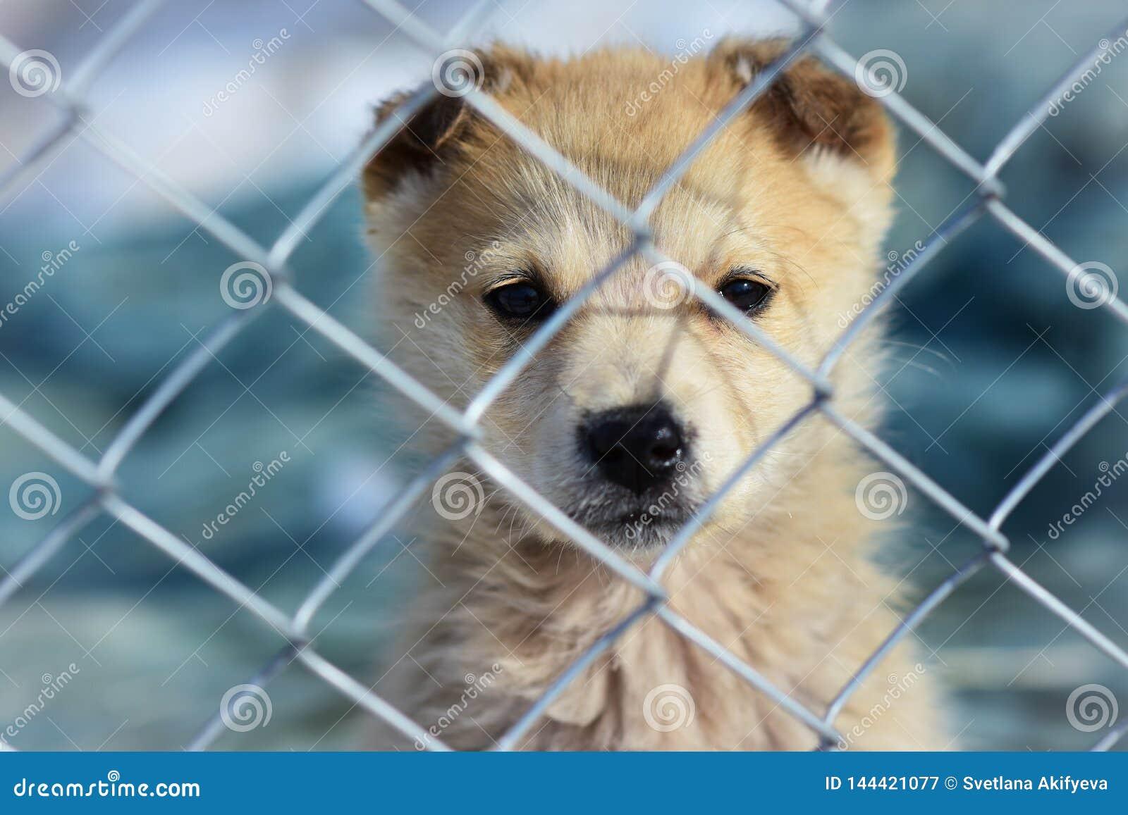 Портрет щенка через бары в приюте для животных