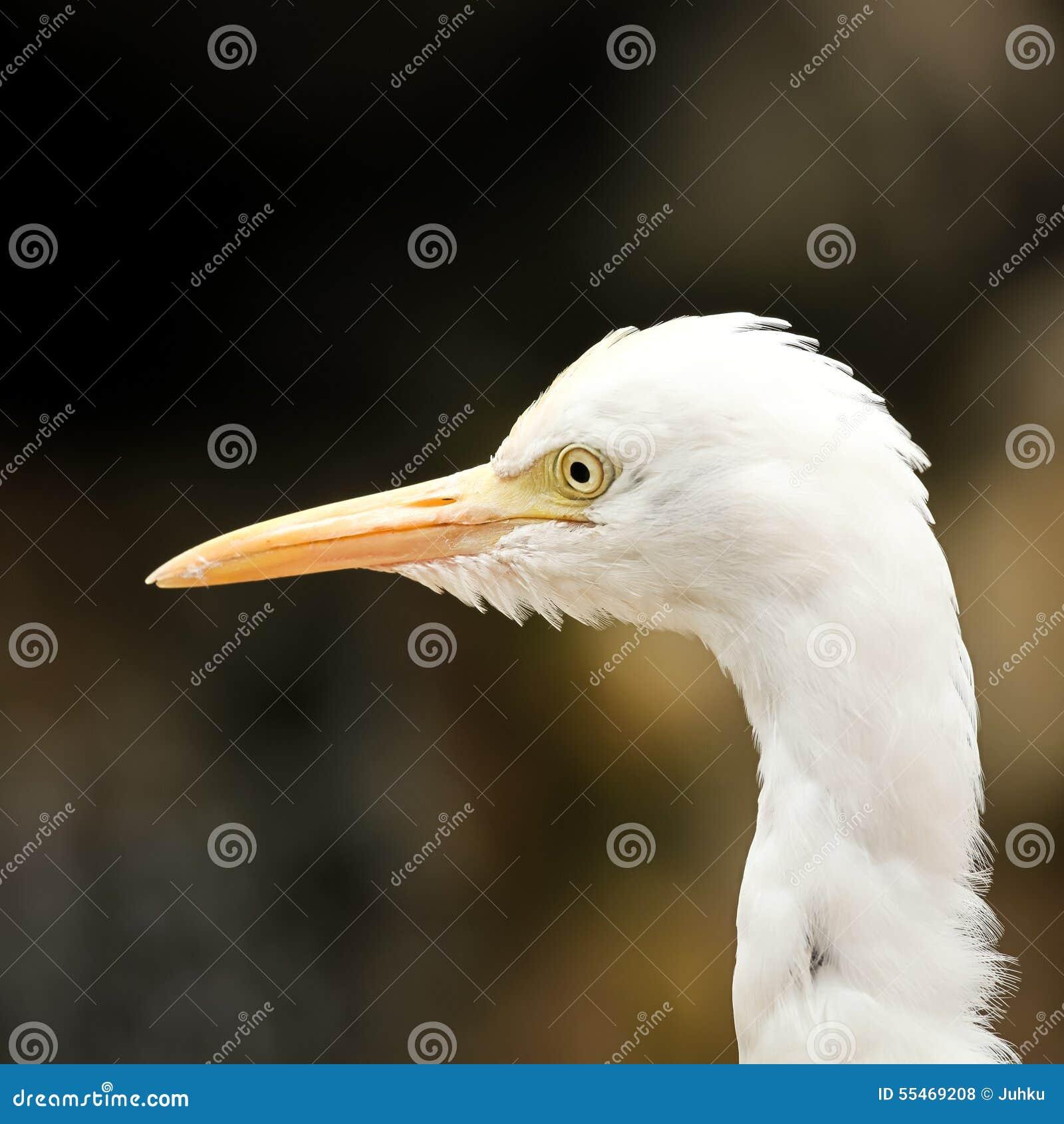 Портрет egret скотин