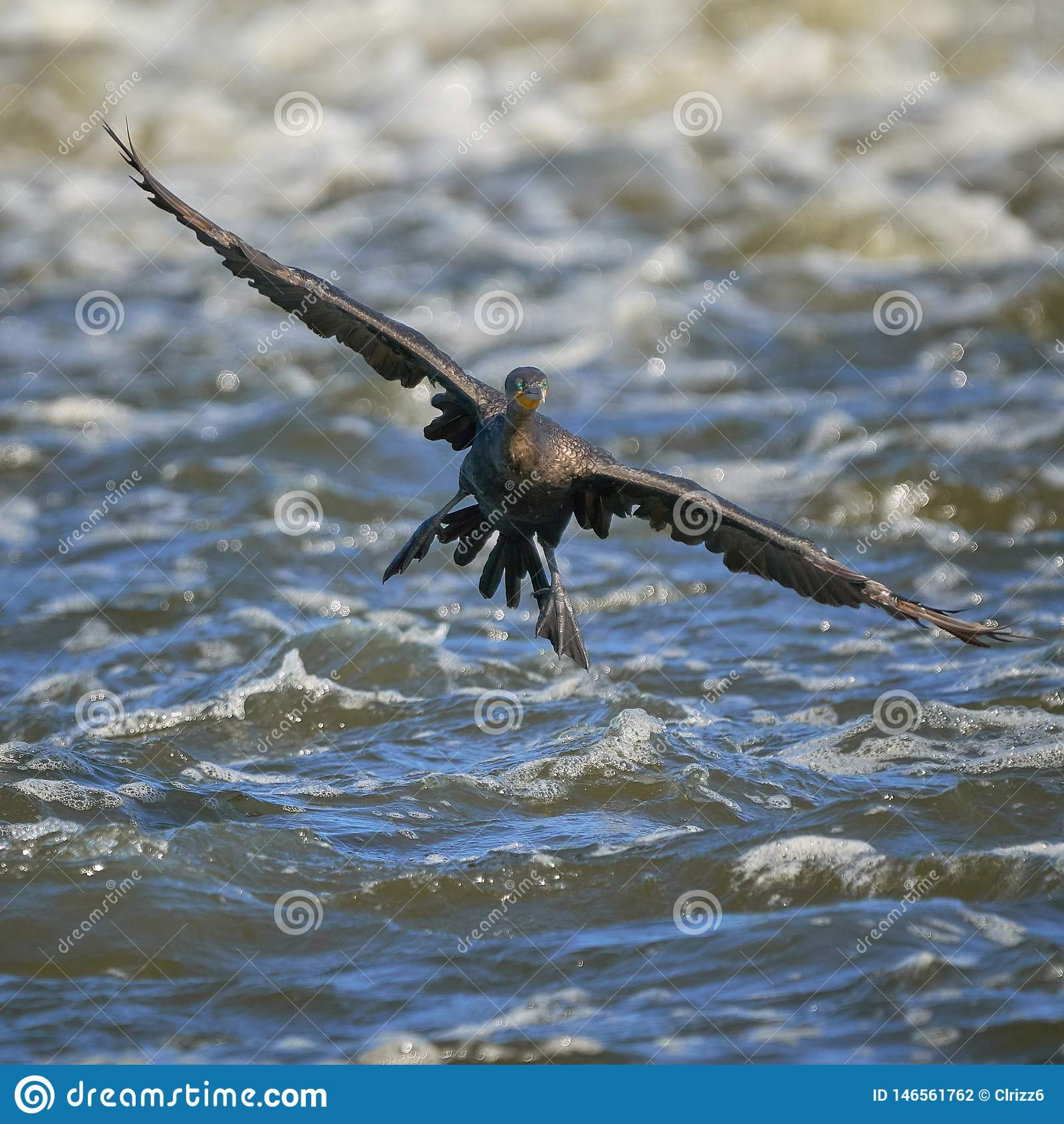 Посадка баклана на реке лисы
