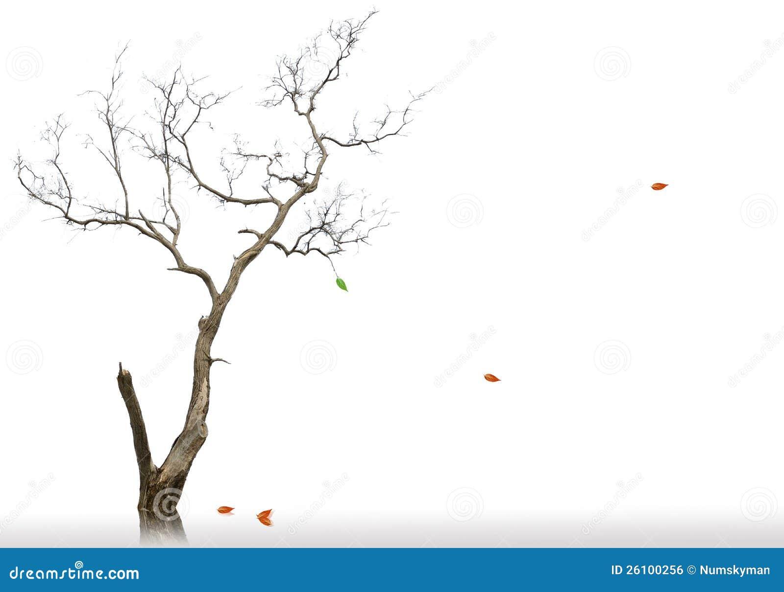 Последние листья мертвого и сухого вала
