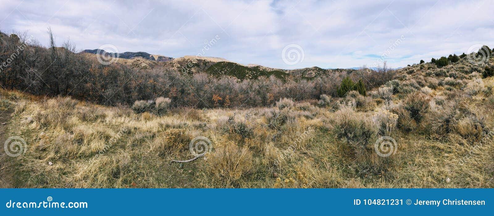 Последний лес панорамы падения осматривает пеший туризм, велосипед, верхом отстает через деревья на желтой вилке и розовый каньон