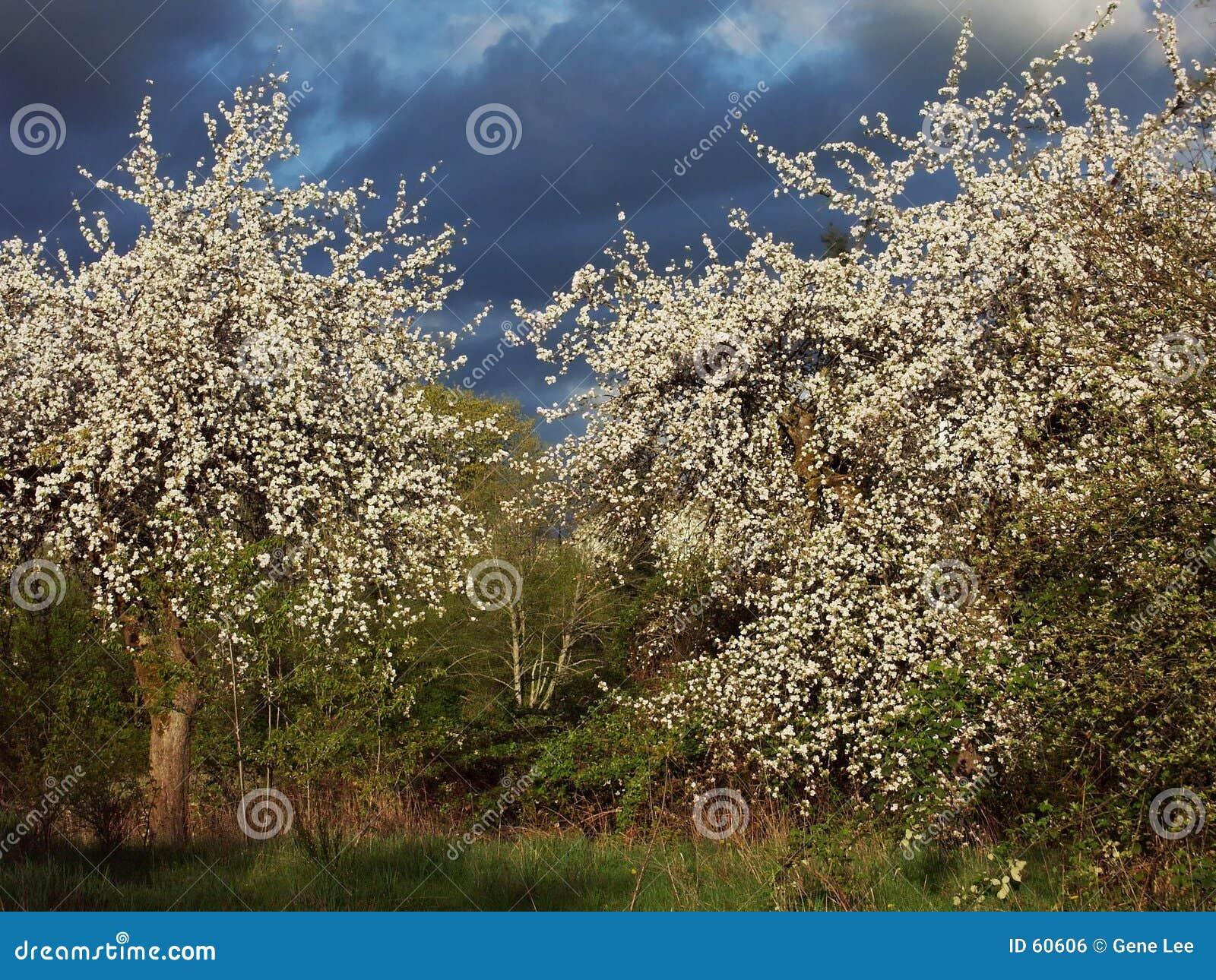 последняя весна обрядов