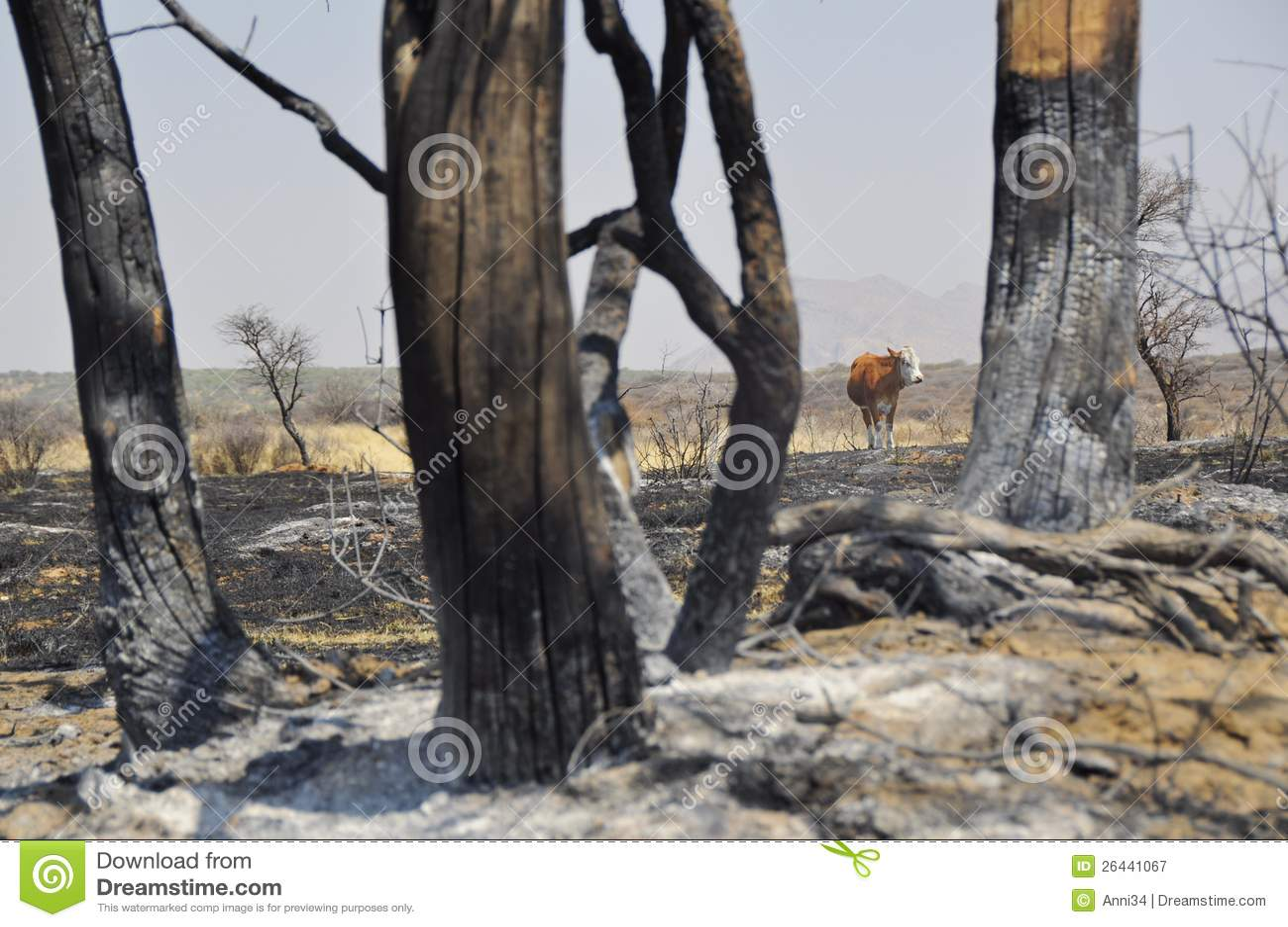 После пожара bush