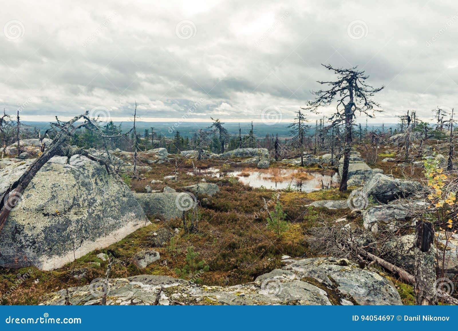 После лесного пожара