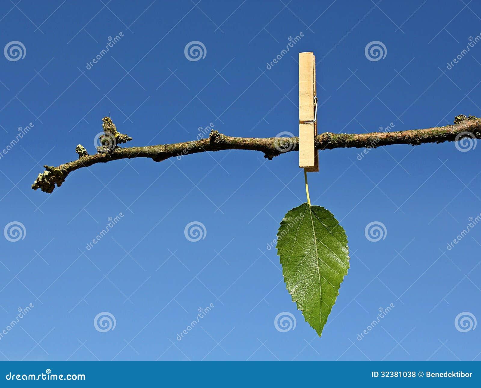 Последние зеленые лист