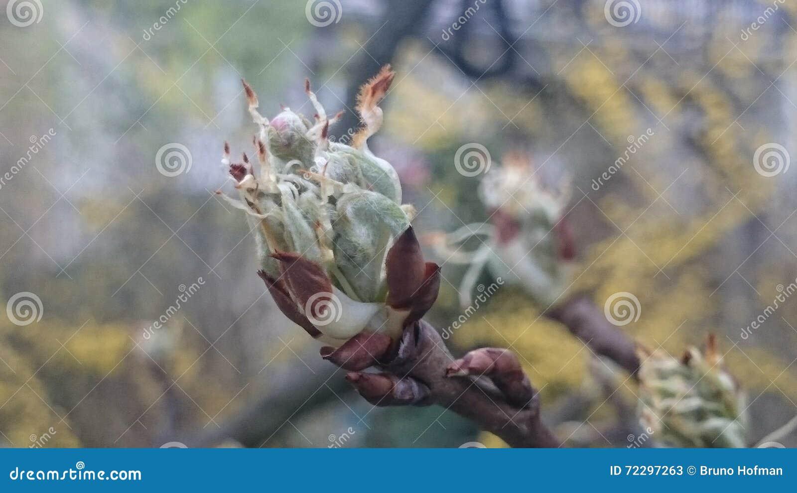 Download После цветеня яблони стоковое изображение. изображение насчитывающей природа - 72297263