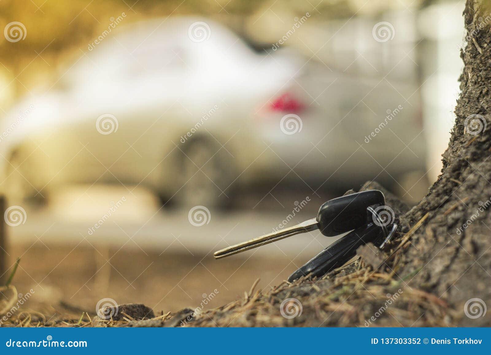 Потерянные ключи автомобиля на упаденных иглах голубого спруса заднее bokeh предпосылки нерезкости