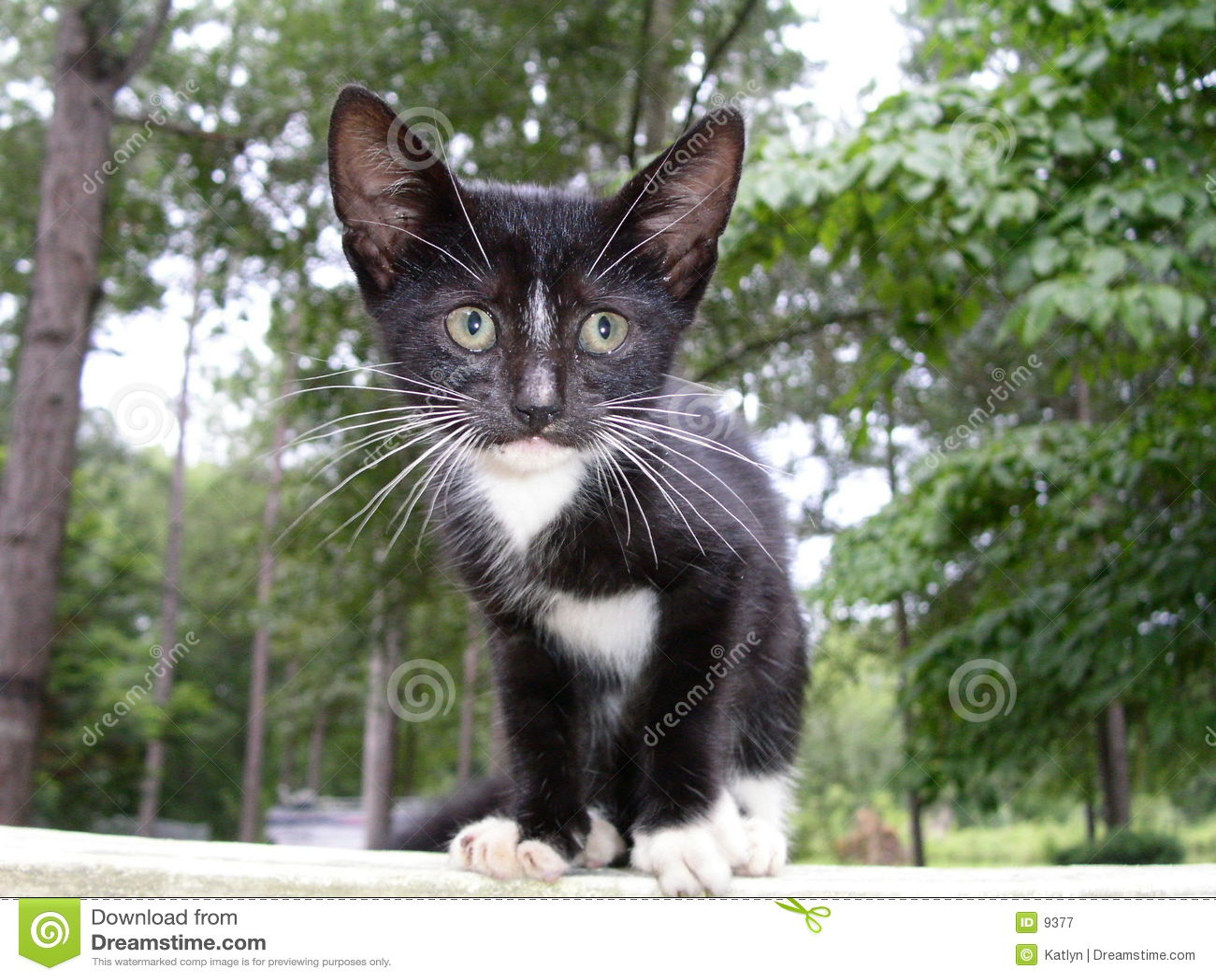потерянный котенок