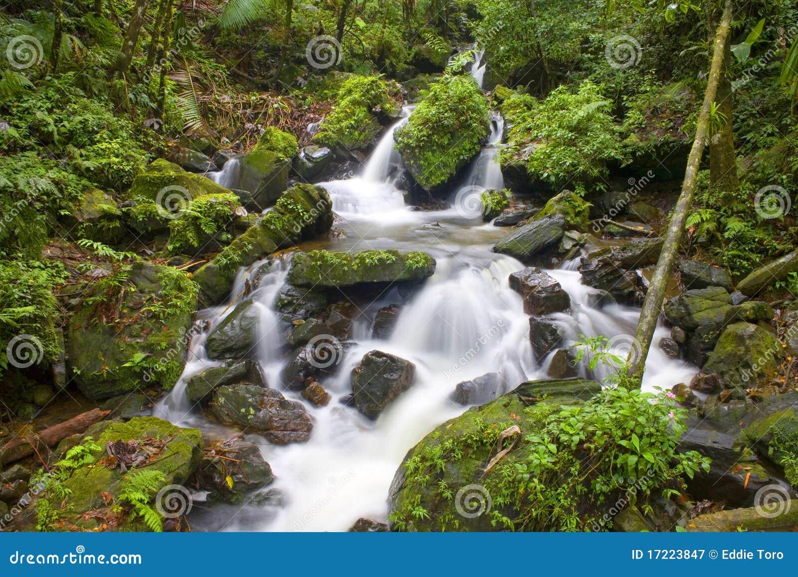 Поток реки El Yunque