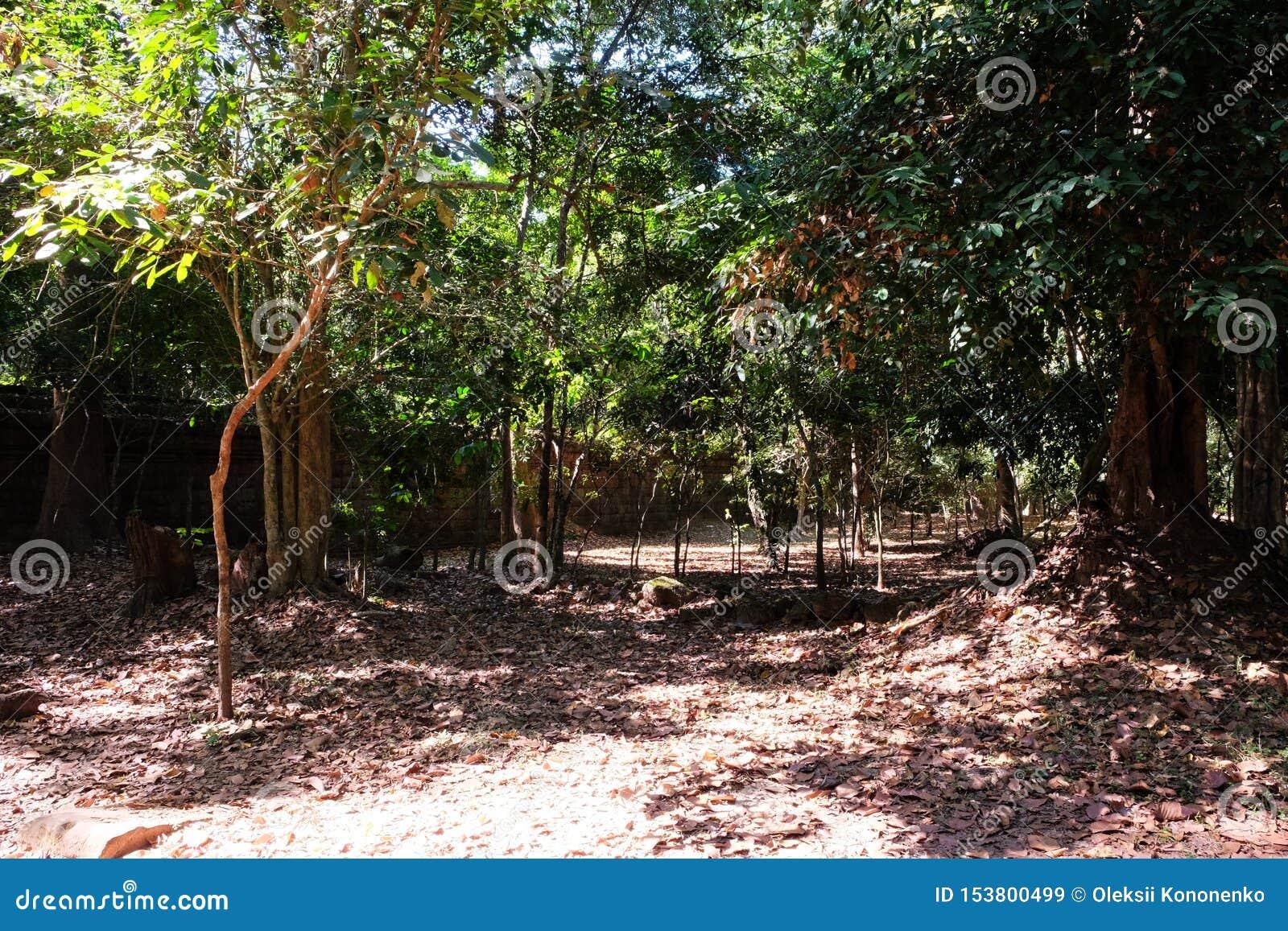 Почва тропического леса плотно посыпанная с сухими листьями Часть старой каменной стены в погоде тропического леса солнечной