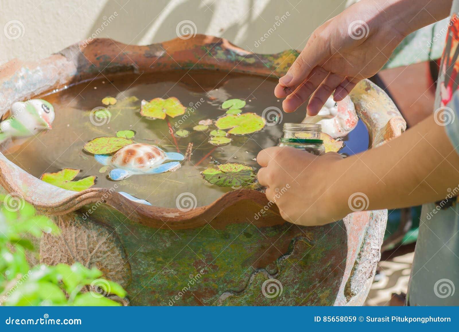 Подавая рыбы в ушате