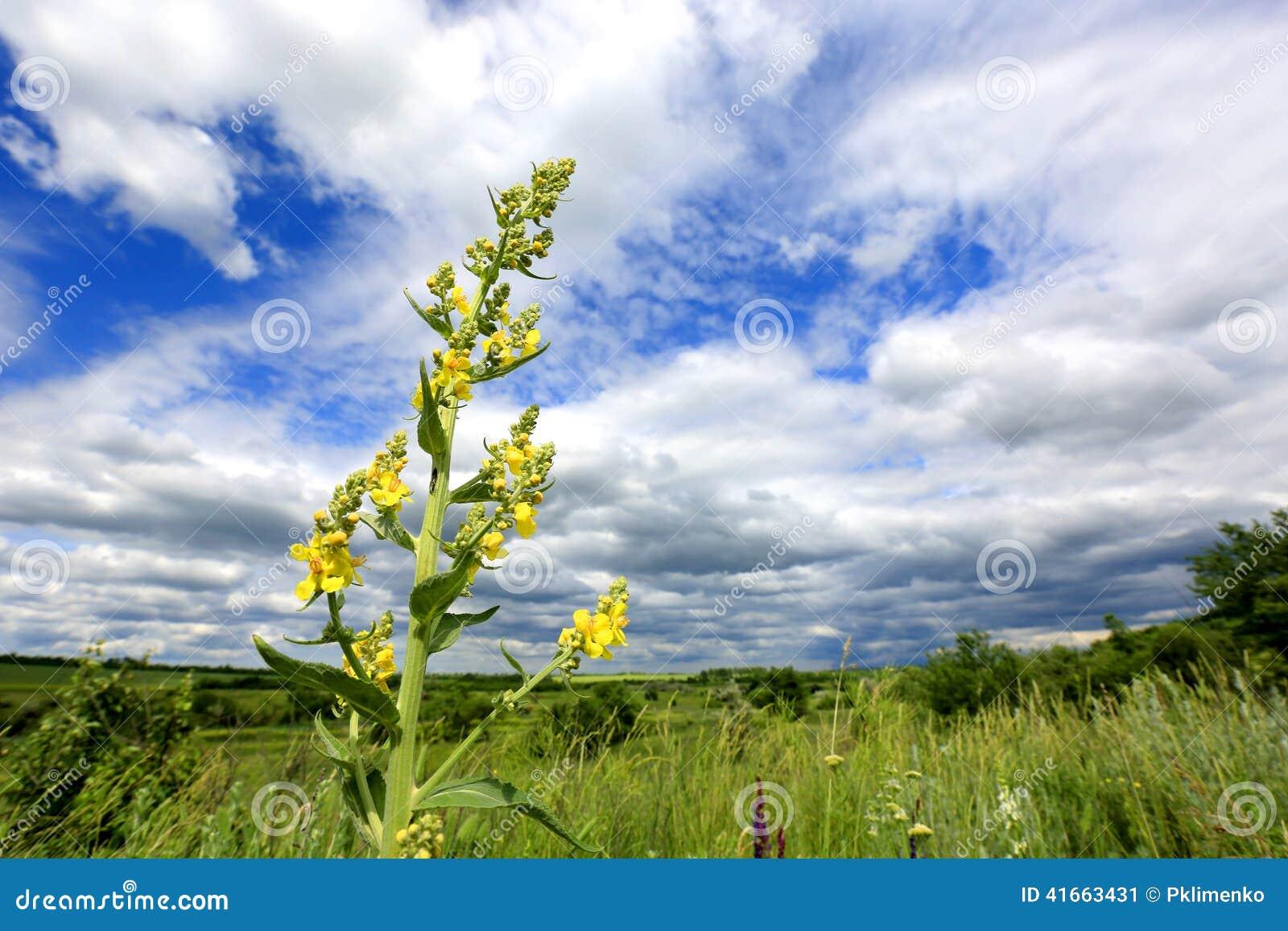 Полевой цветок в временени