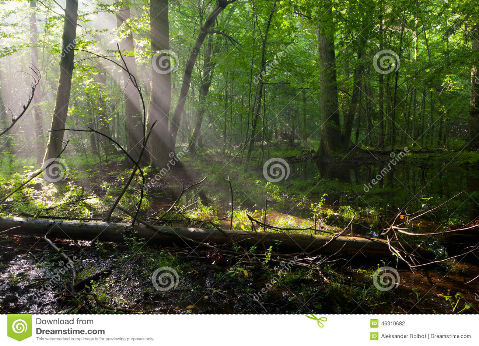 Полдень лета при свет входя в богатую лиственную стойку