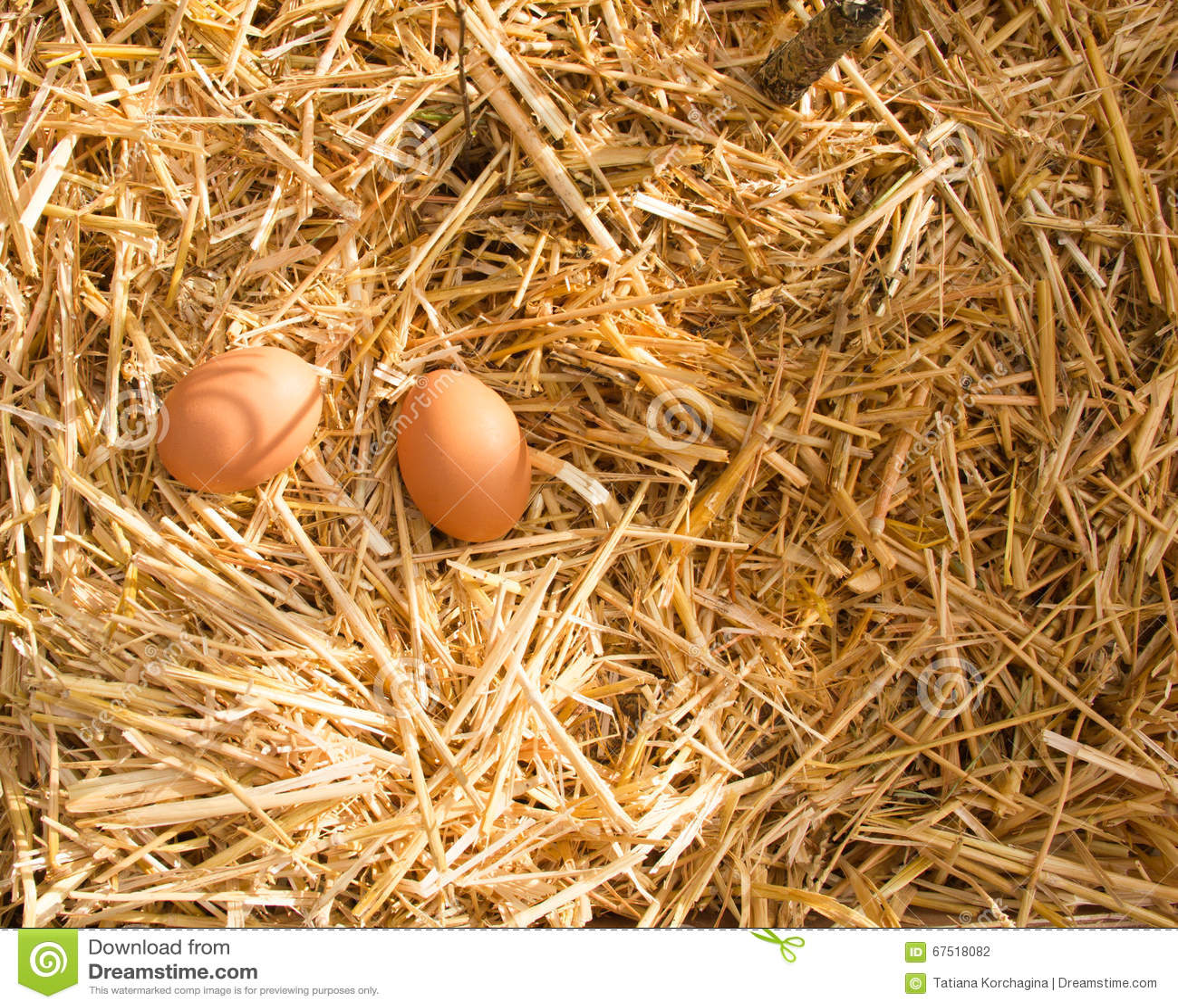 полдень 2 свежих яичка в солнечном свете в strow
