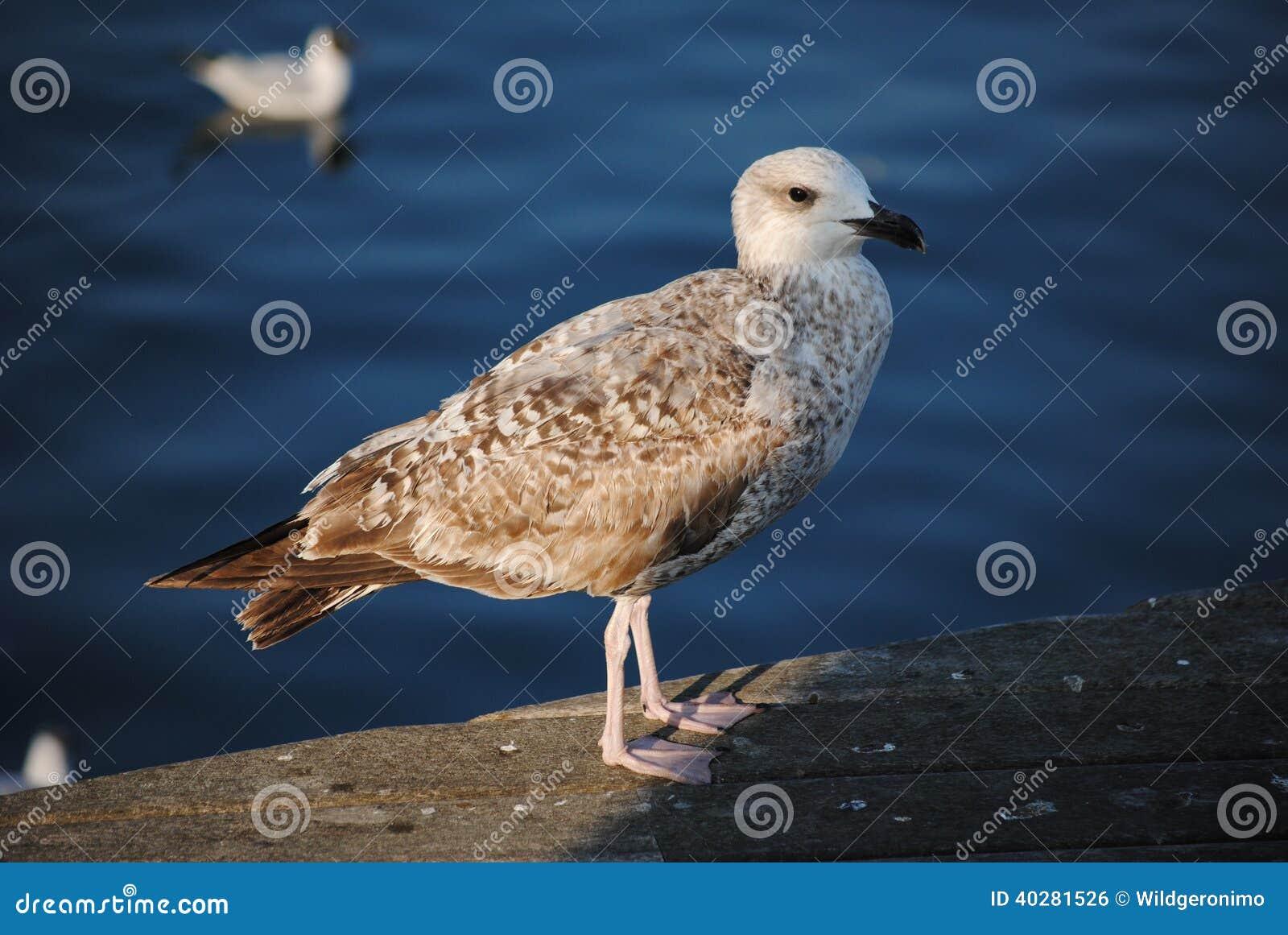 Подиум, чайка и море