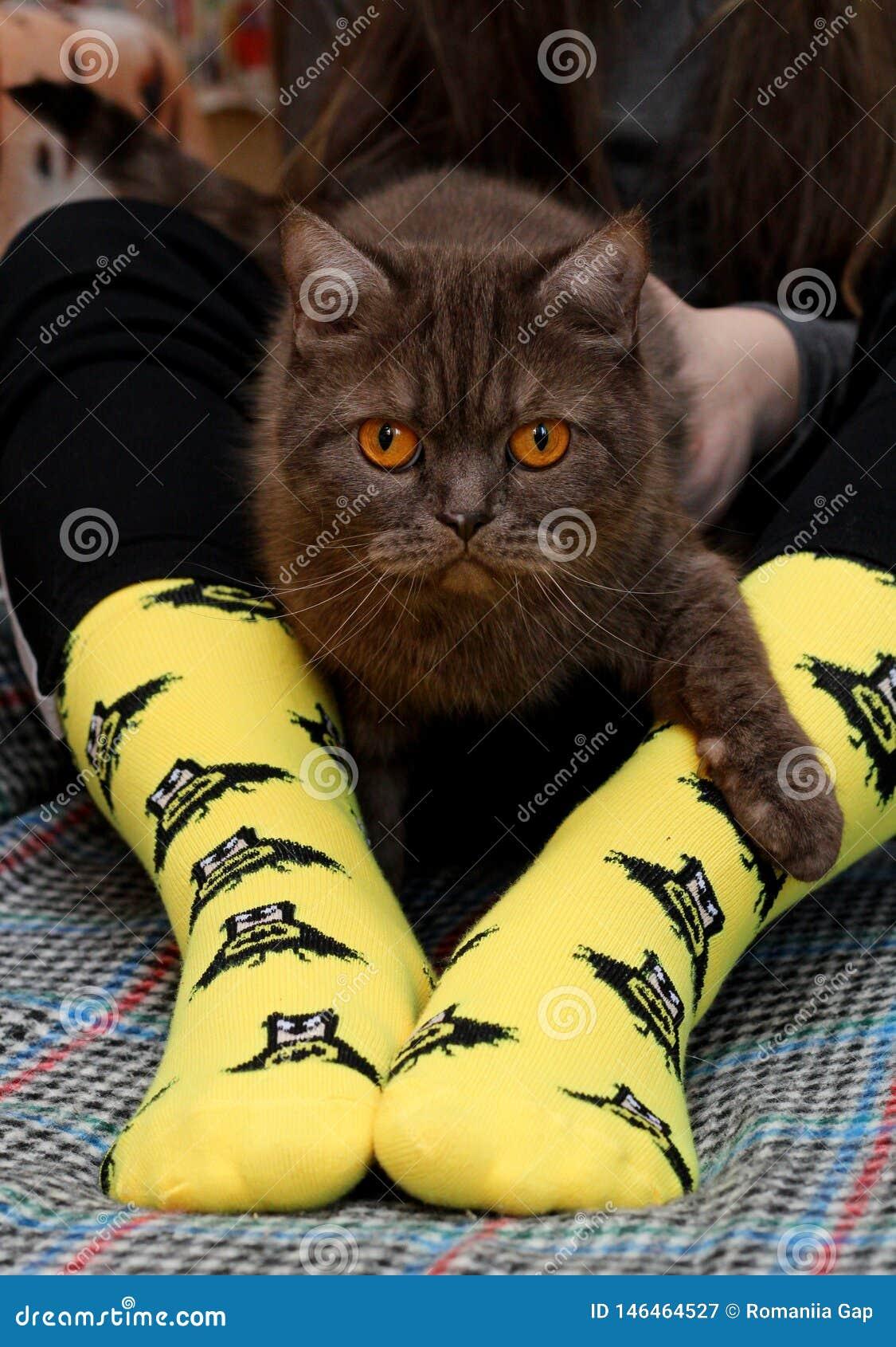 Предназначенная для подростков девушка с грустным шотландским котом на коленях сидя на кресле Желтые носки с черной картиной бэтм