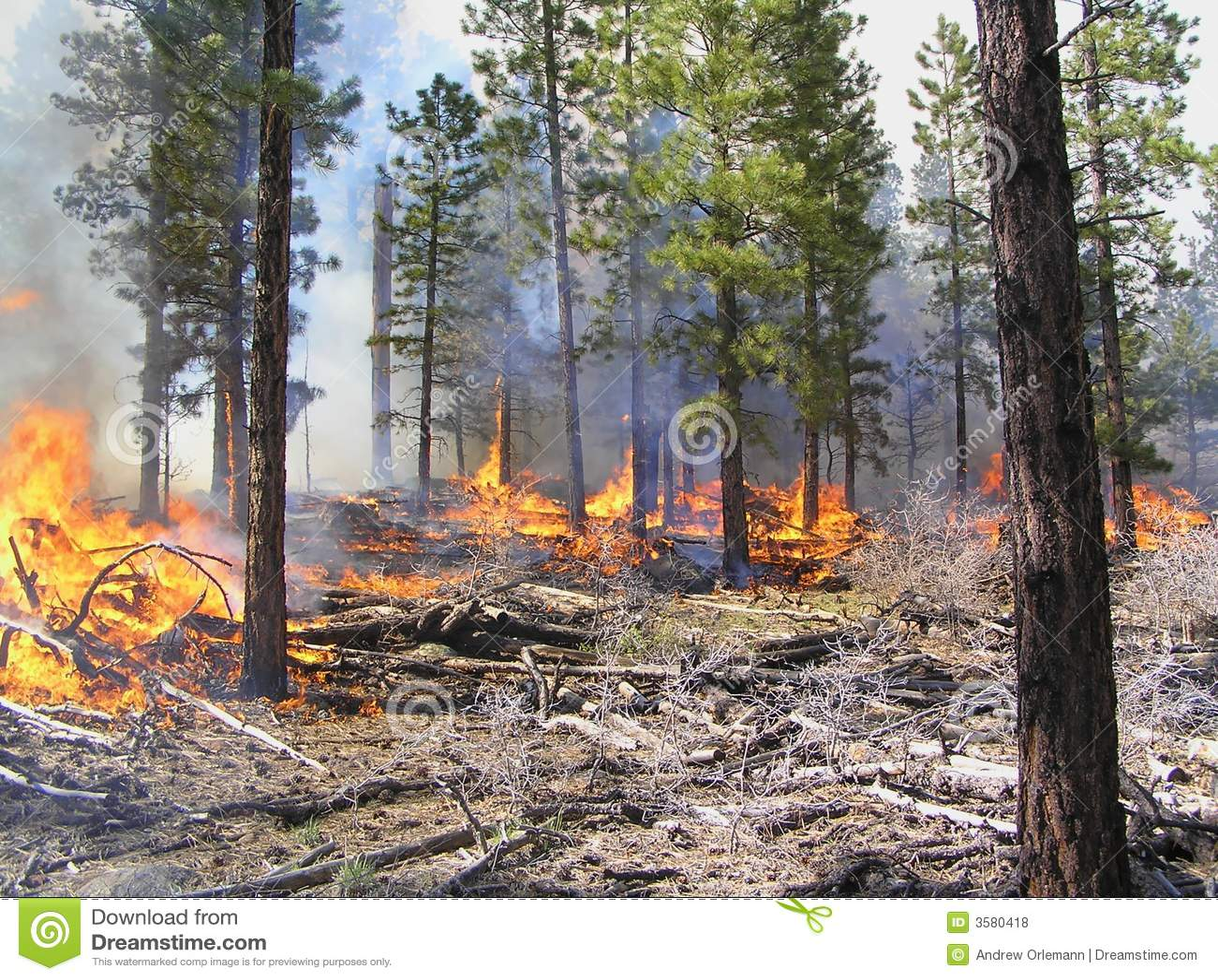предписанный пожар