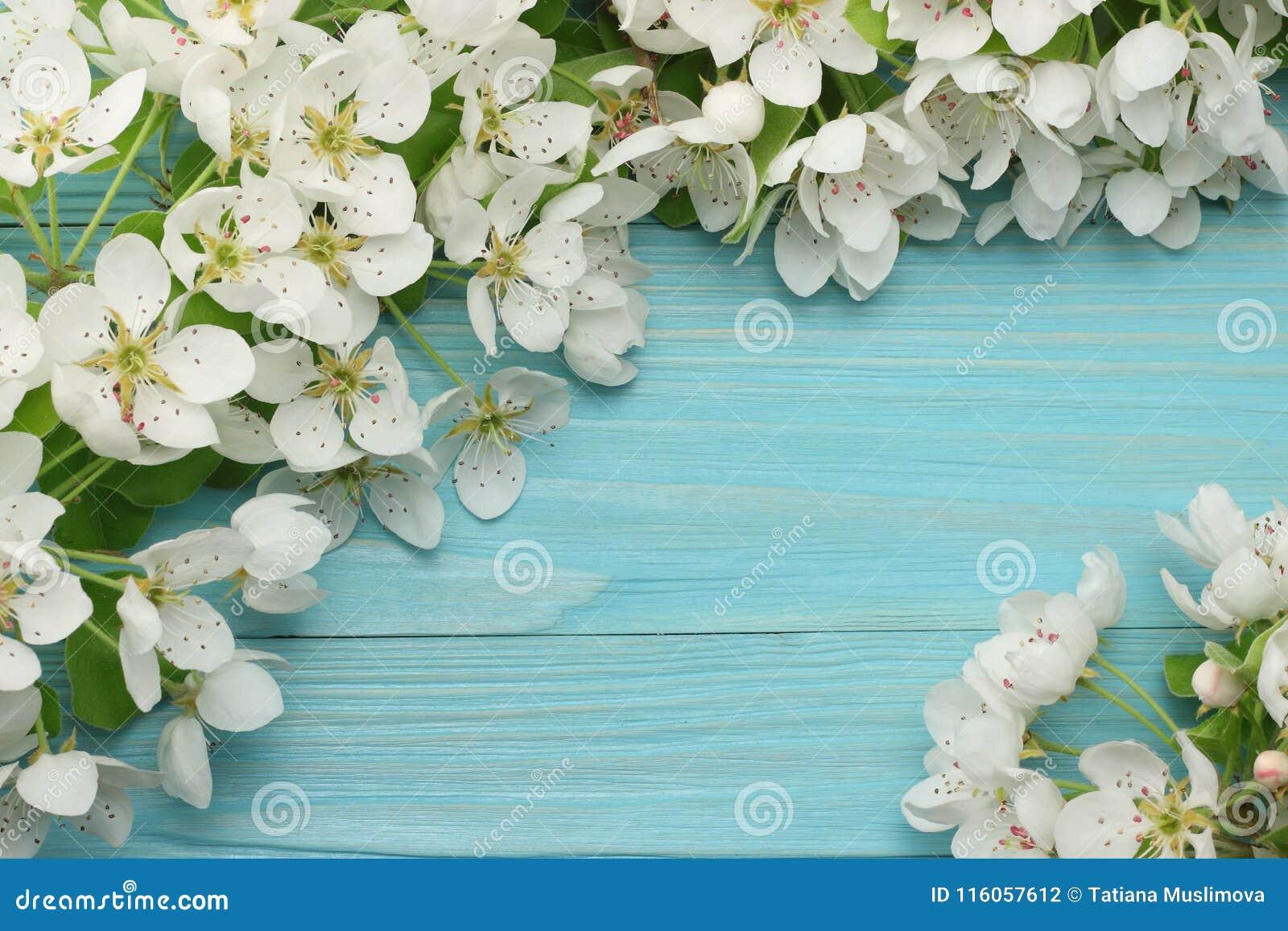 Предпосылка весны с цветениями белых цветков на голубой деревянной предпосылке Взгляд сверху