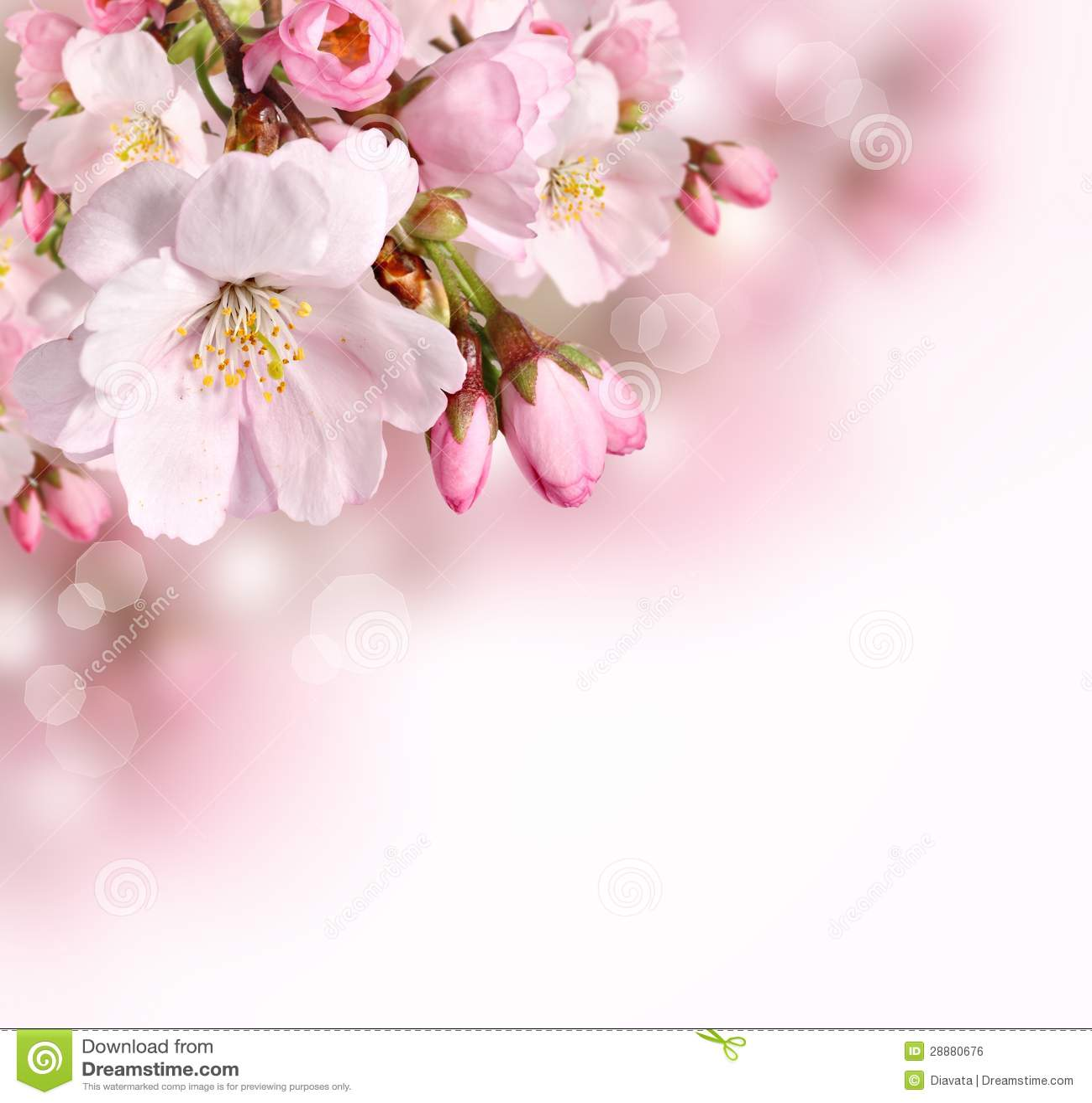 Предпосылка границы весны с розовым цветением