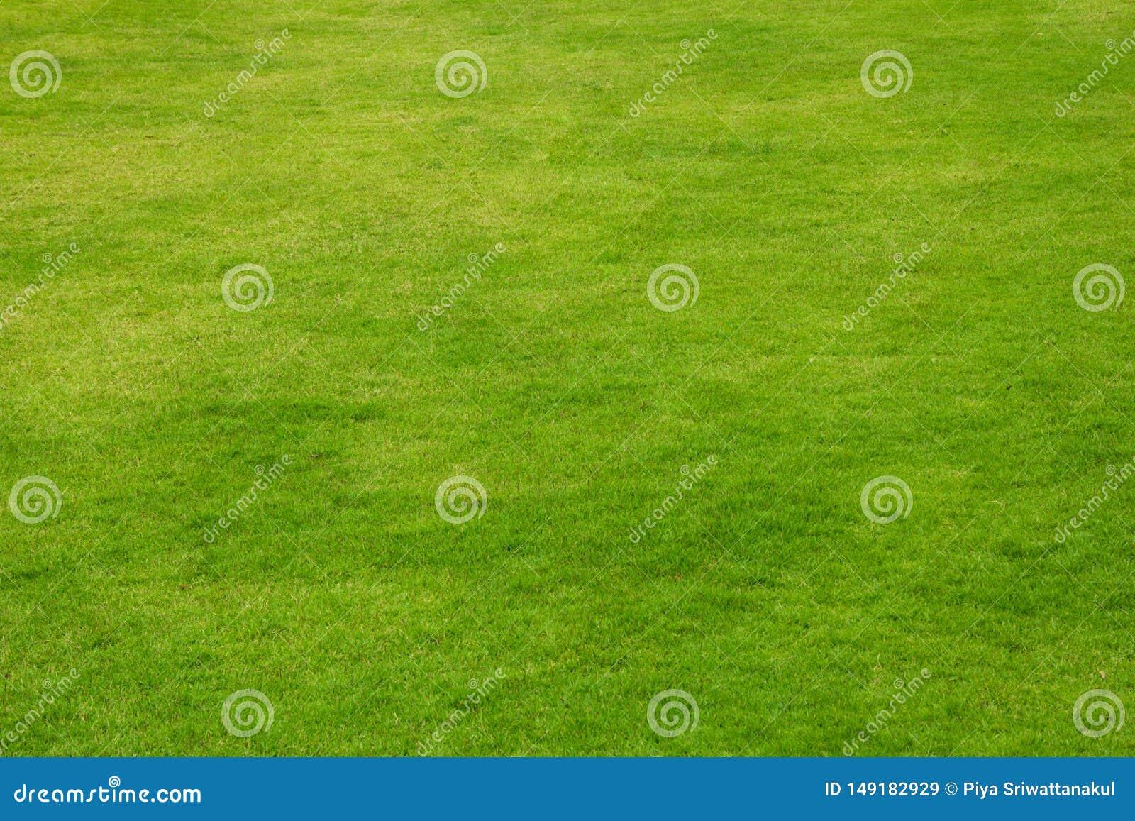 Предпосылка зеленой травы естественная