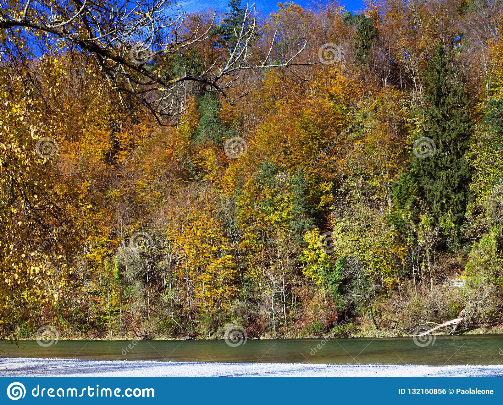 Предпосылка ландшафта осени Лес с золотой листвой вдоль реки, в солнечном свете Утихомиривать и спокойная сцена