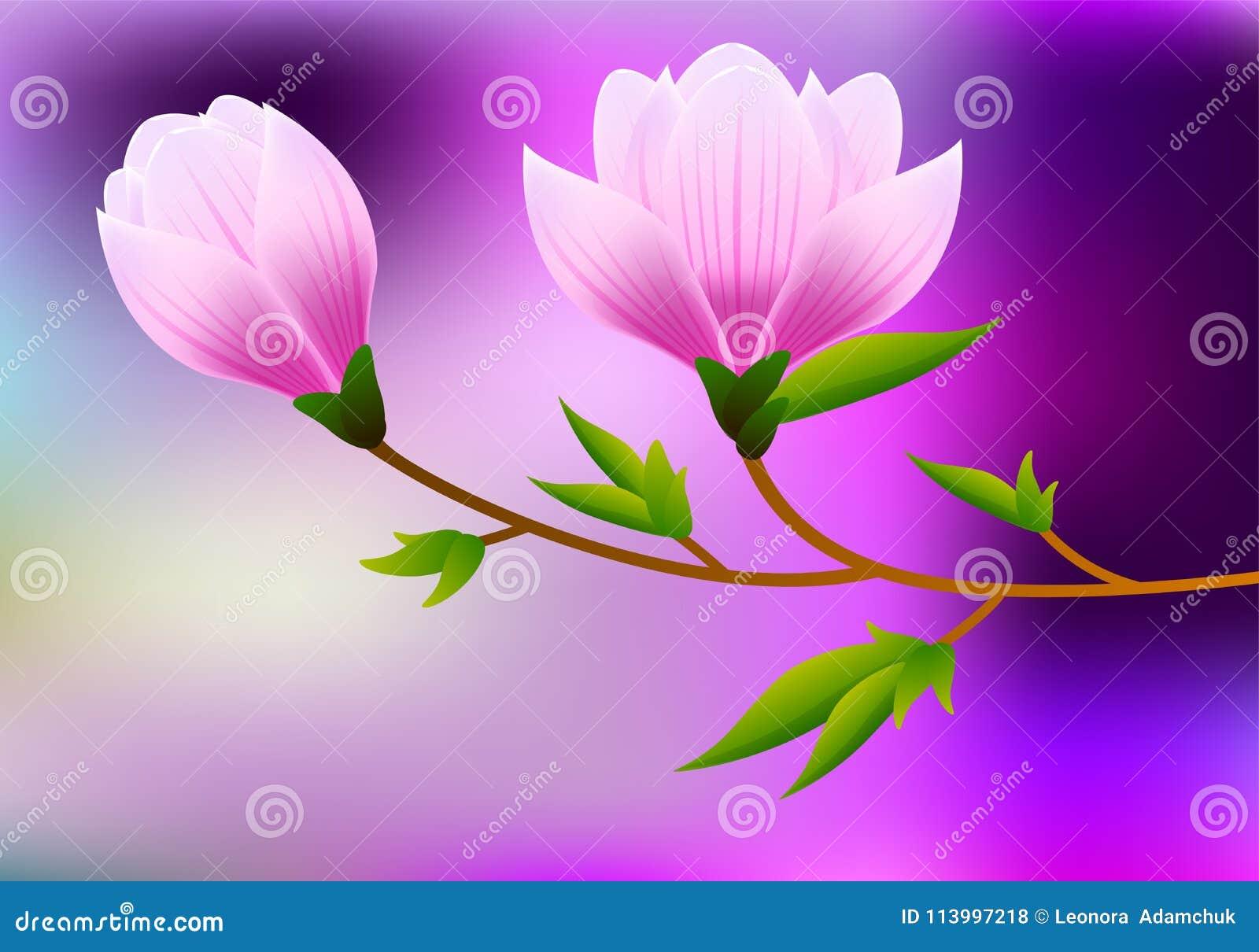 Предпосылка магнолии весны с завтрак-обедом цветения розовых цветков