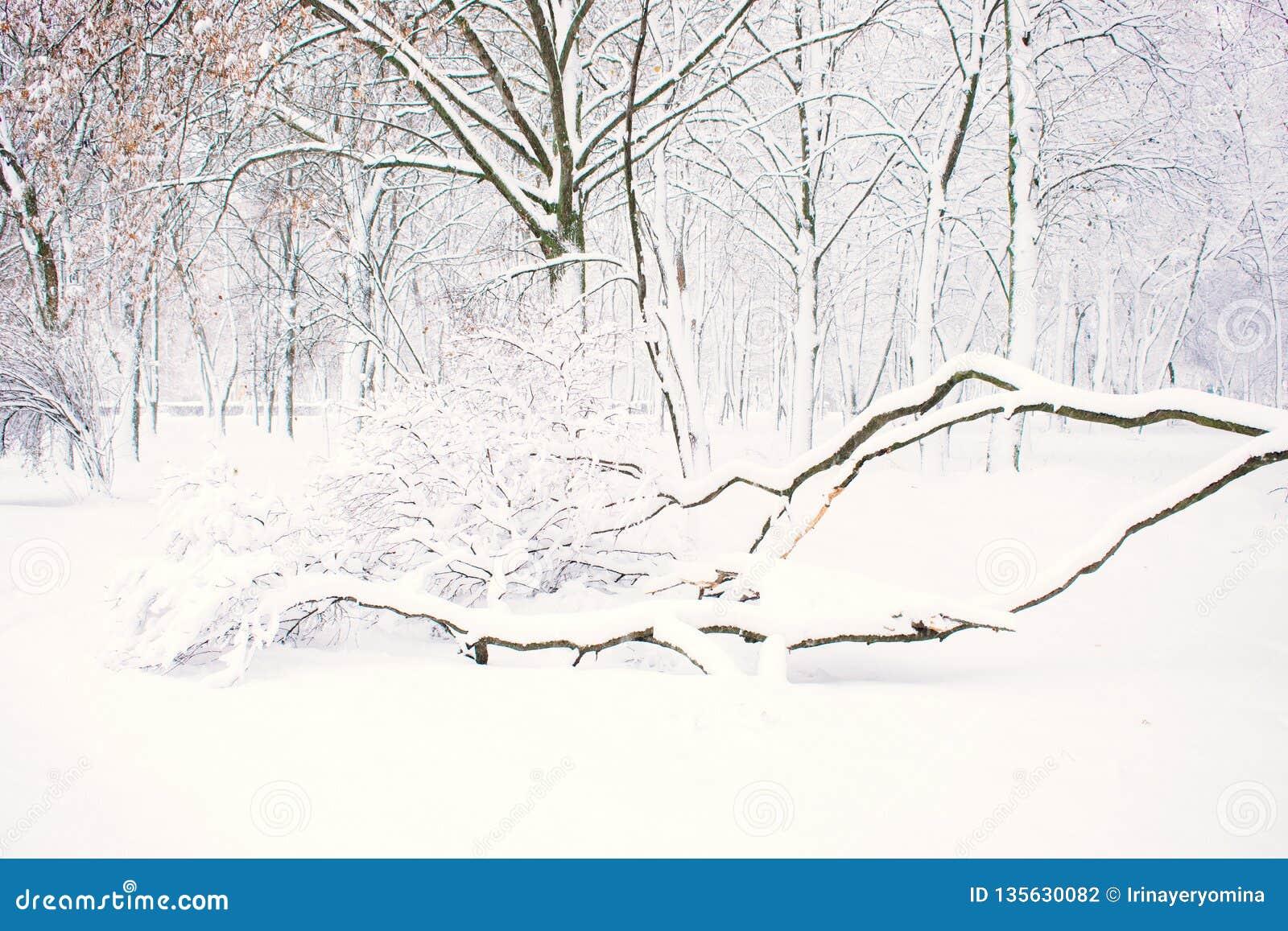 Предпосылка природы зимы, ландшафт Лес зимы, парк со снежными упаденными деревьями Плохая погода зимы, шторм, вьюга, смещения сне