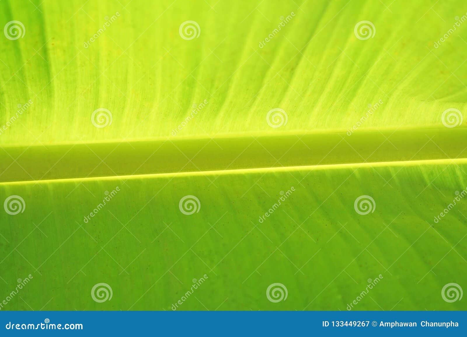 Предпосылка разрешения банана