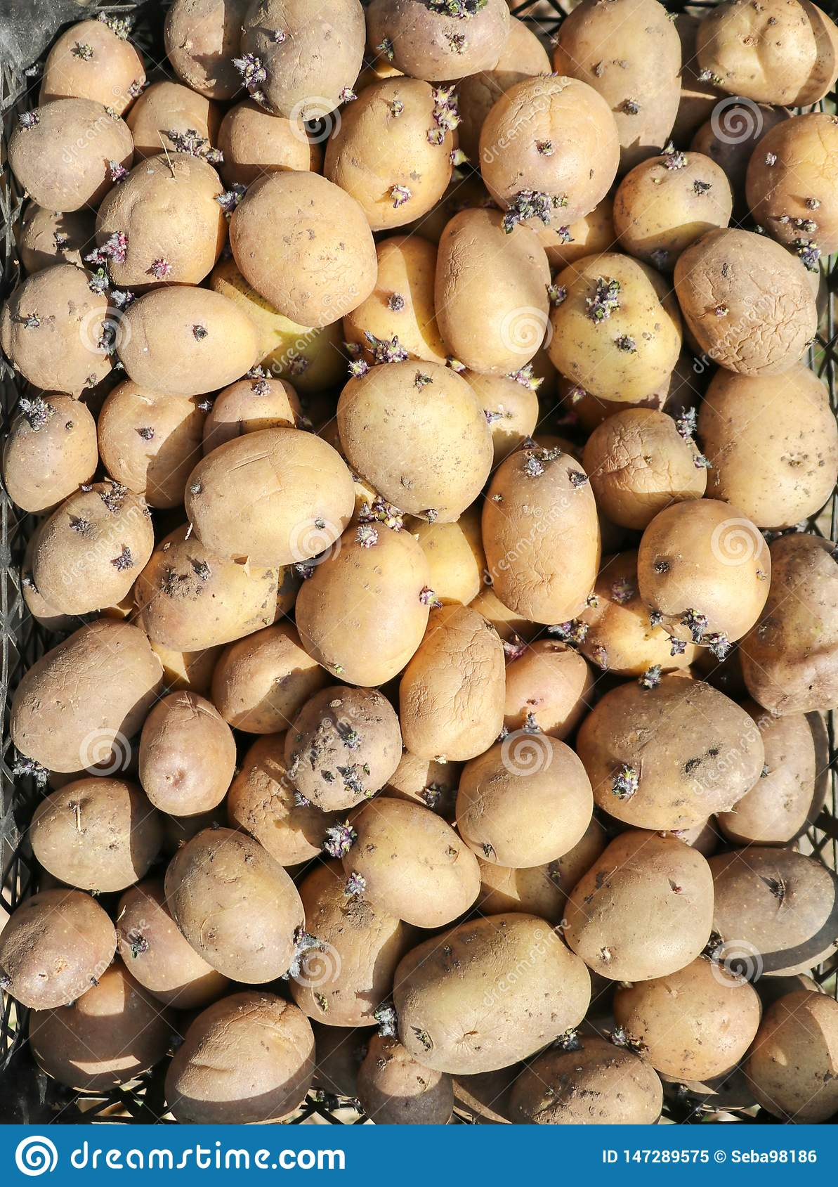 Предпосылка с картошками