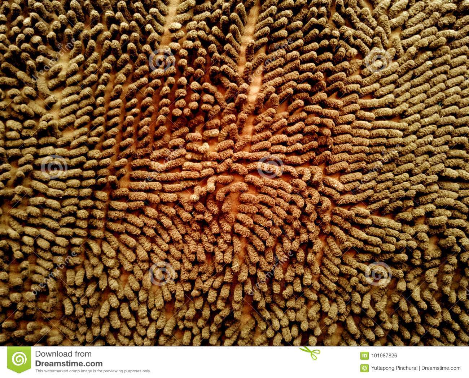 Предпосылка текстуры циновки brougham Циновка естественного волокна радушная для bac