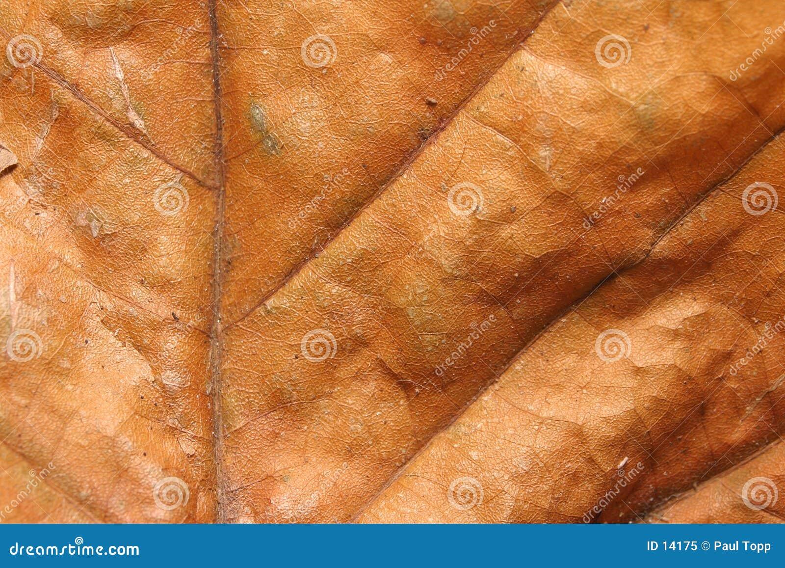 предпосылки сушат текстуру листьев