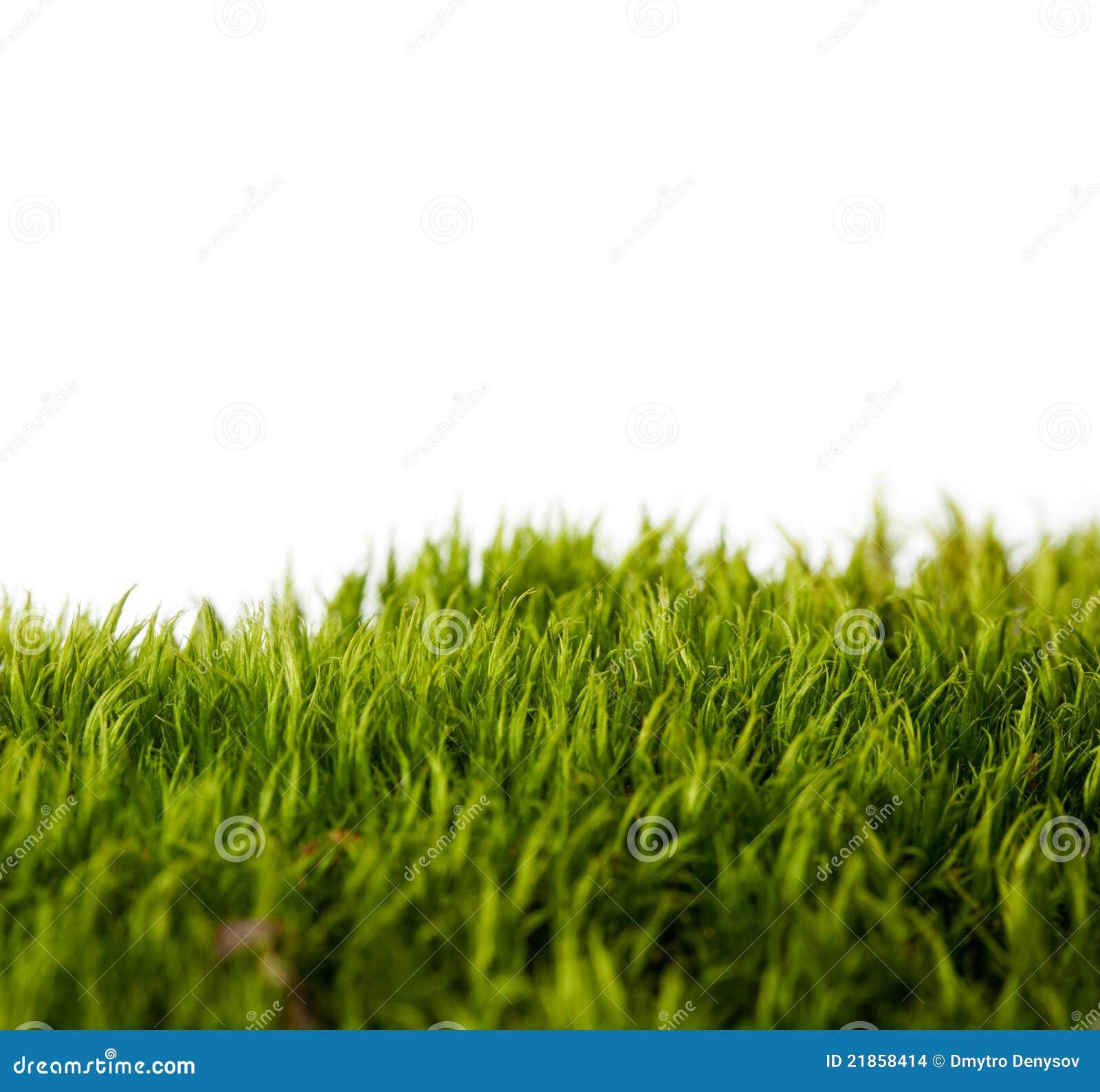 Предпосылки травы свежей весны зеленой
