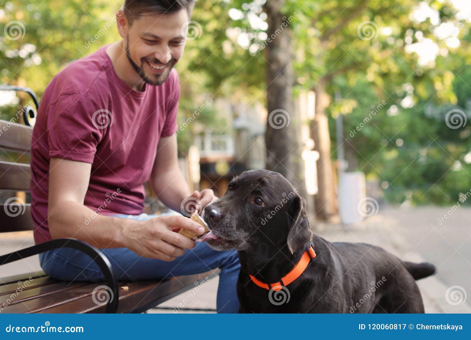Предприниматель обрабатывая его коричневый retriever labrador с мороженым