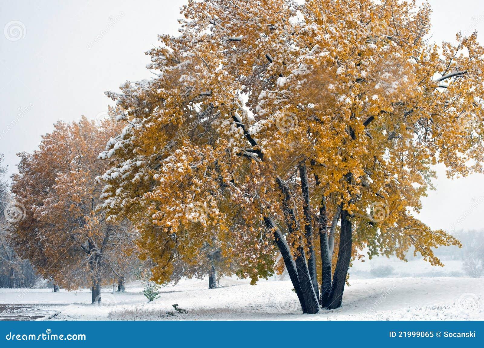 предыдущий желтый цвет снежка листьев