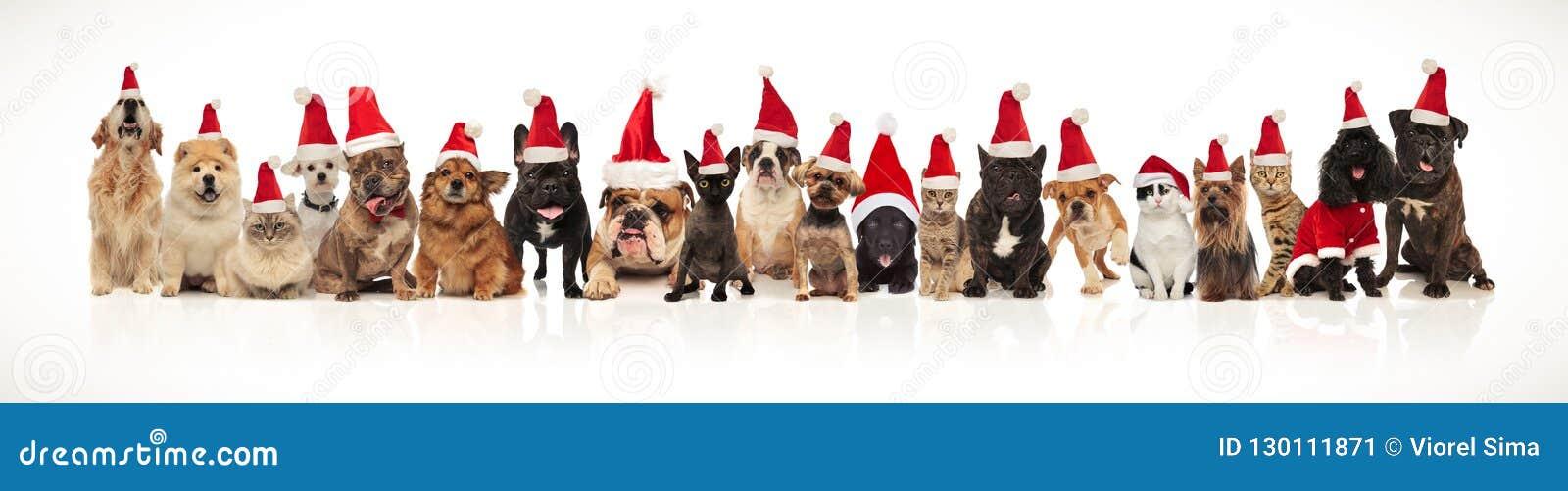 Прелестная группа в составе много любимцев рождества нося шляпы santa